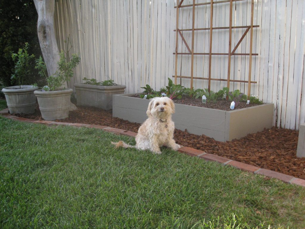 Annie, the homeowner's dog, is even more excited about the garden.