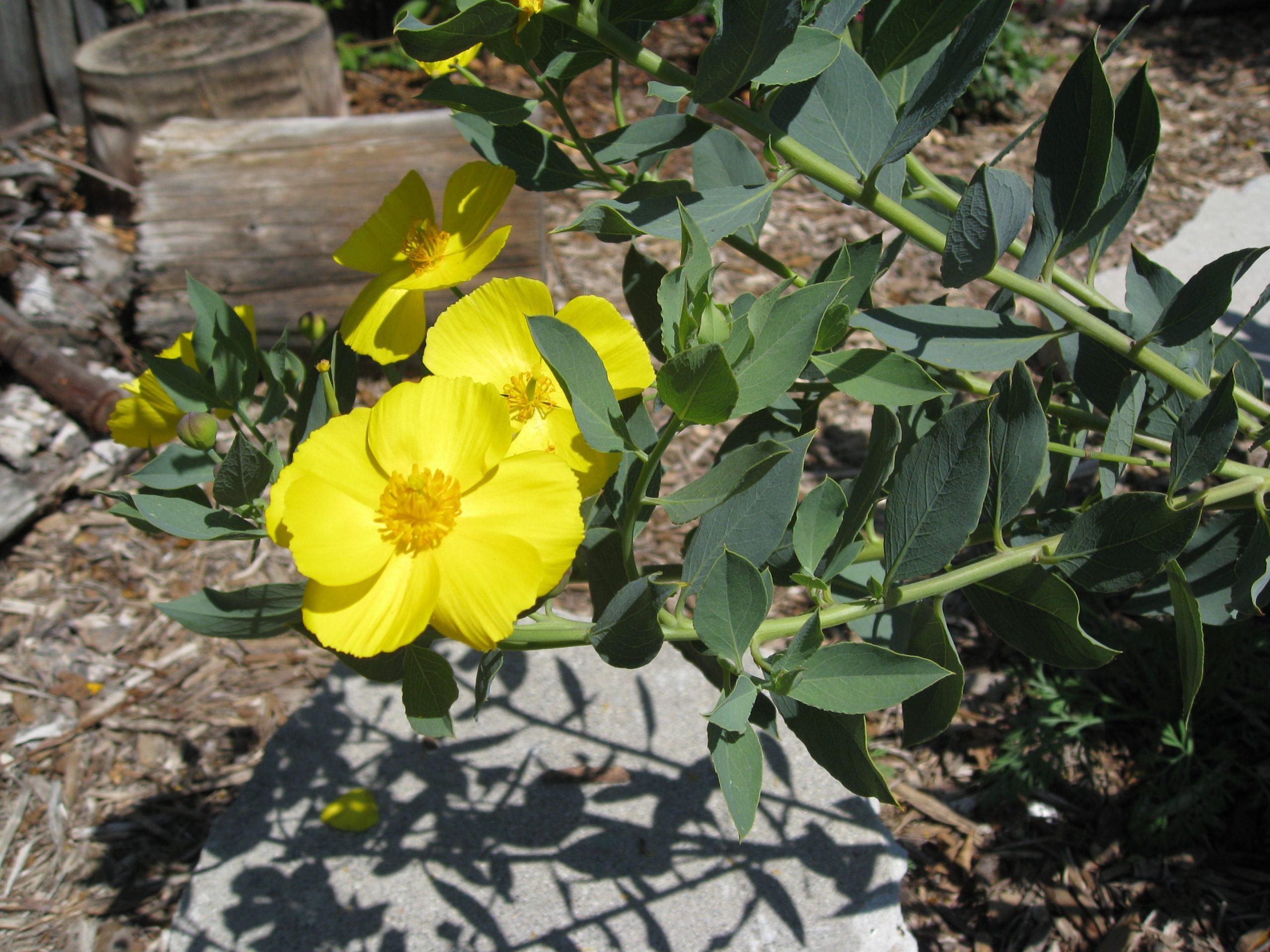 Read more about the article Native Garden Tour – Part 1: Great Plants for Pollinators