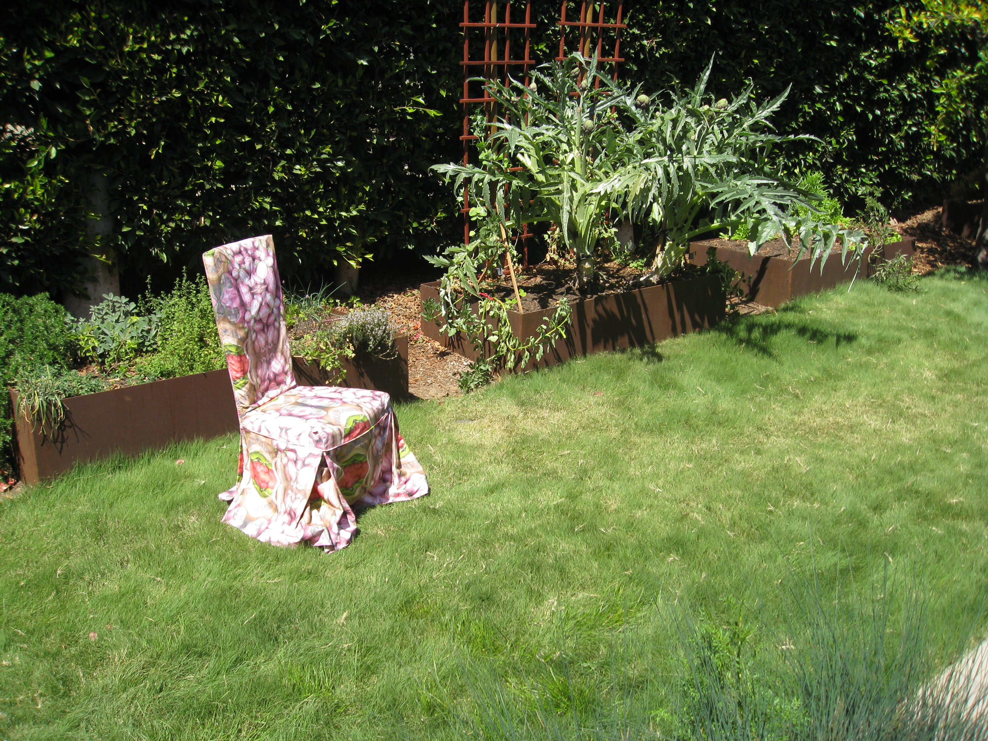 Need a lawn alternative? Buffalo grass works in many circumstances