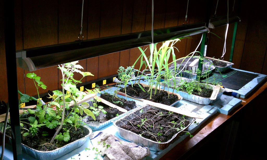 Read more about the article Keys to Lighting Your Indoor Gardening System