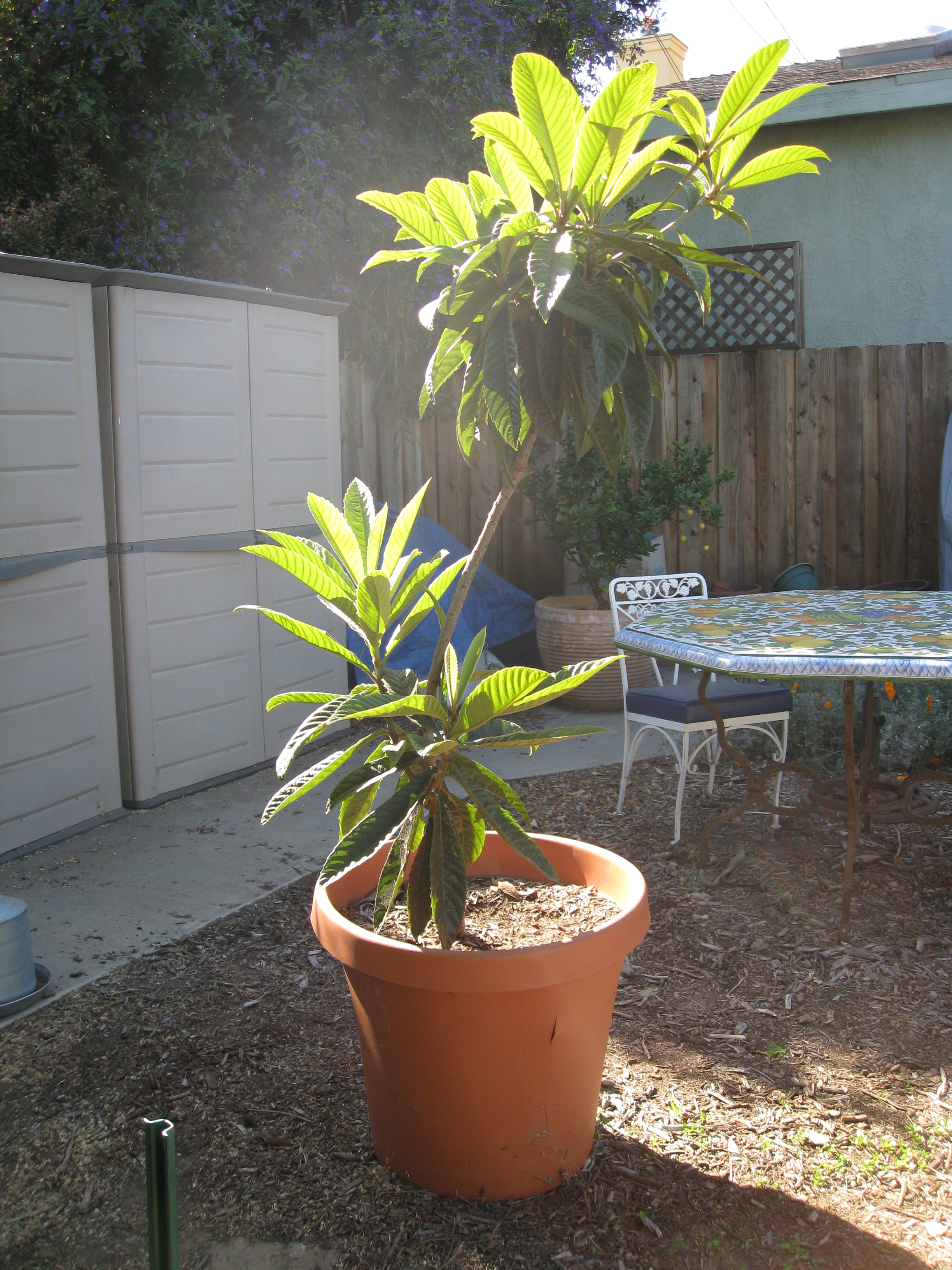 A transplant from a relative's yard.