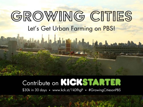 Read more about the article Growing Food in Growing Cities