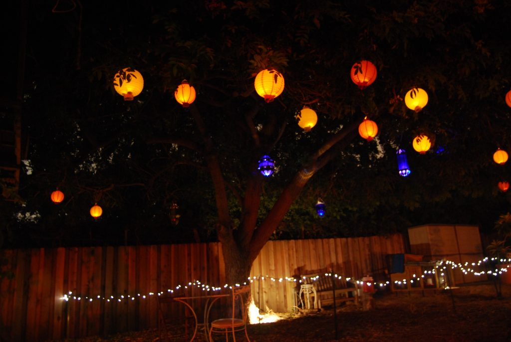 Summer party lights hang from a giant Brazilian Pepper tree