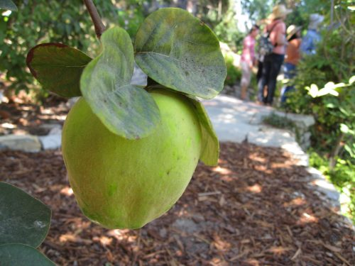 Read more about the article Field Trip: Little Farm in Encino, CA