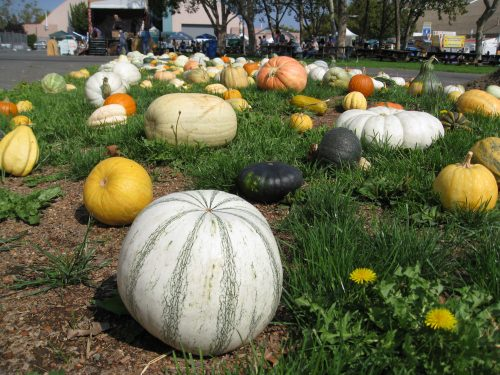 Read more about the article Field Trip: Heirloom Expo 2014 Review