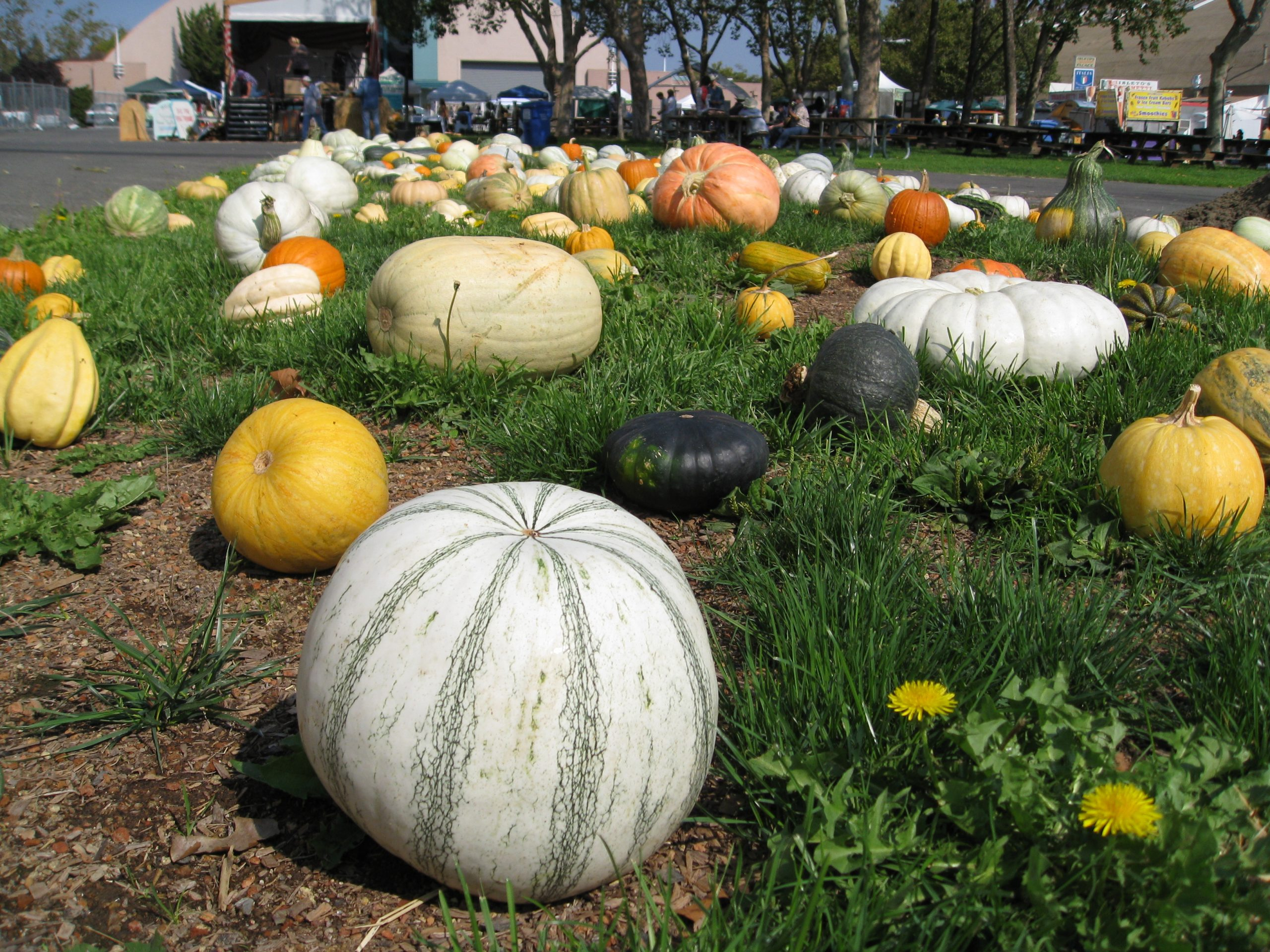 You are currently viewing Field Trip: Heirloom Expo 2014 Review