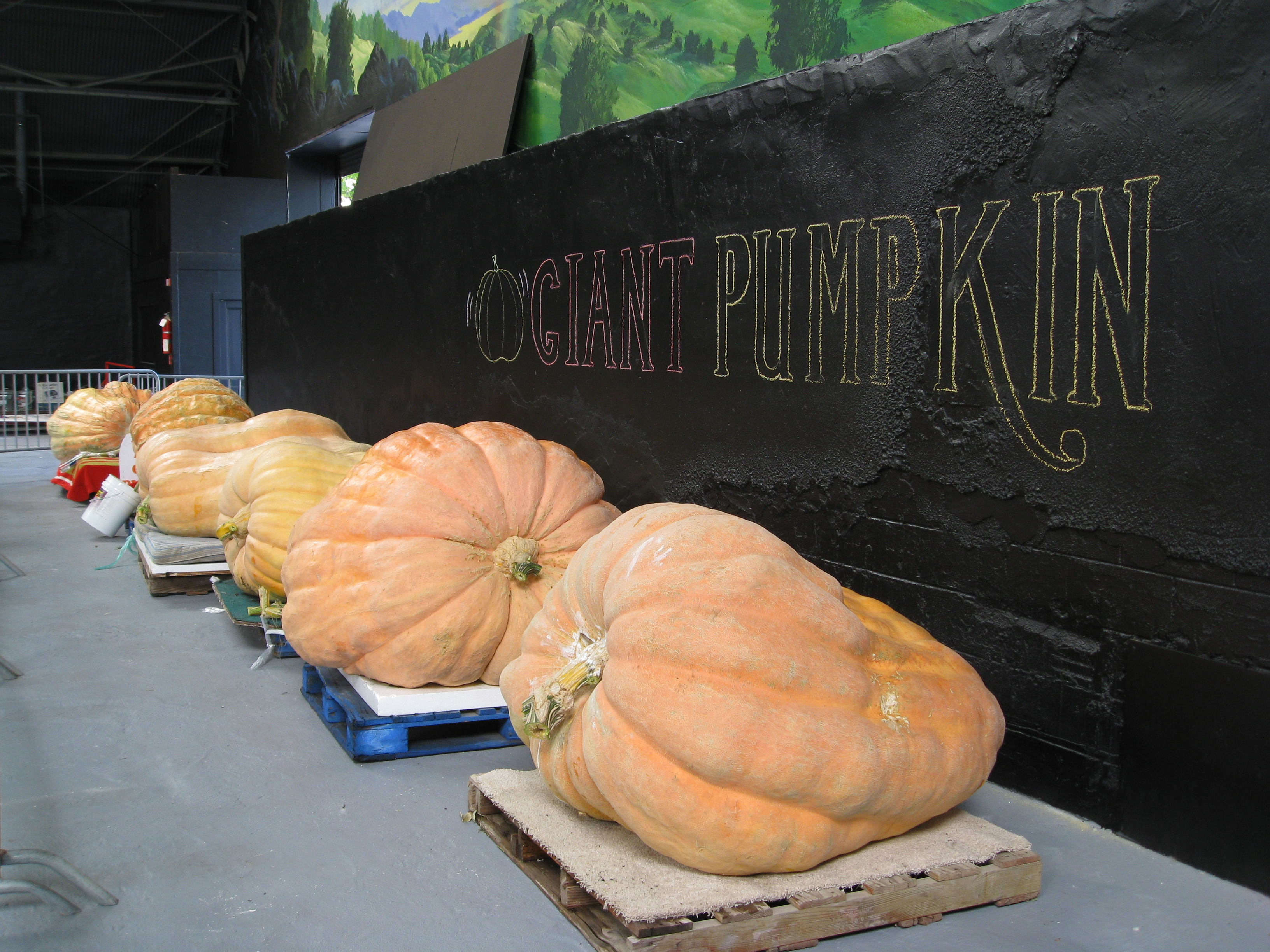 And what would a fair be without a Giant Pumpkin Contest?