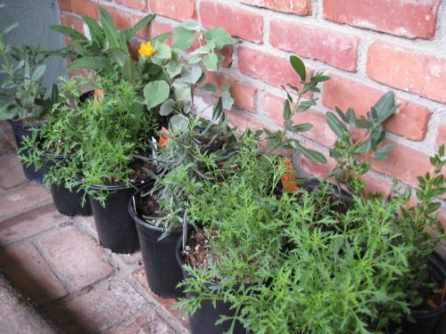 Read more about the article Fall: Time to Plant Perennials