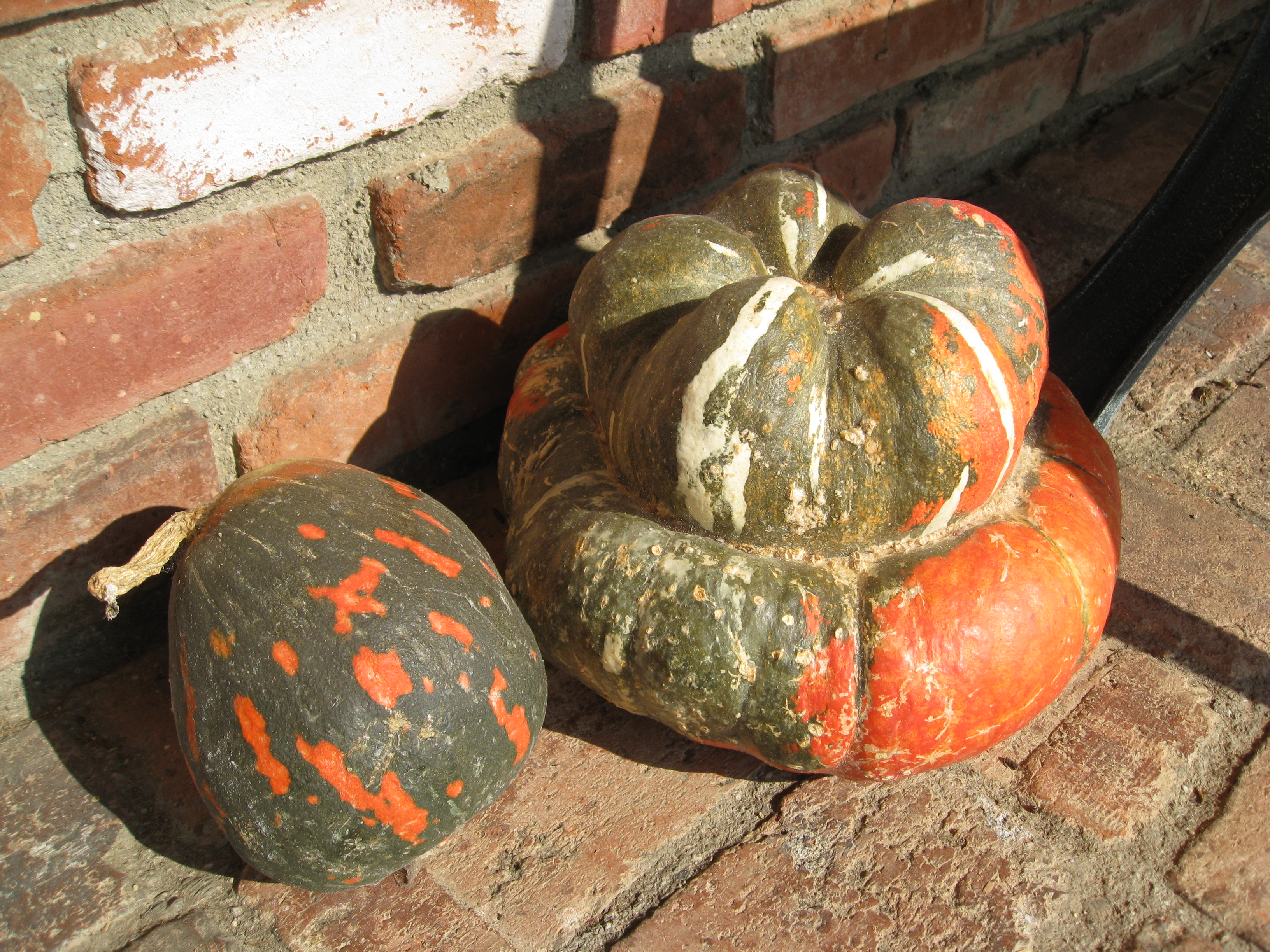 Lakota and Turban squashes decorate the front yard to add fall color