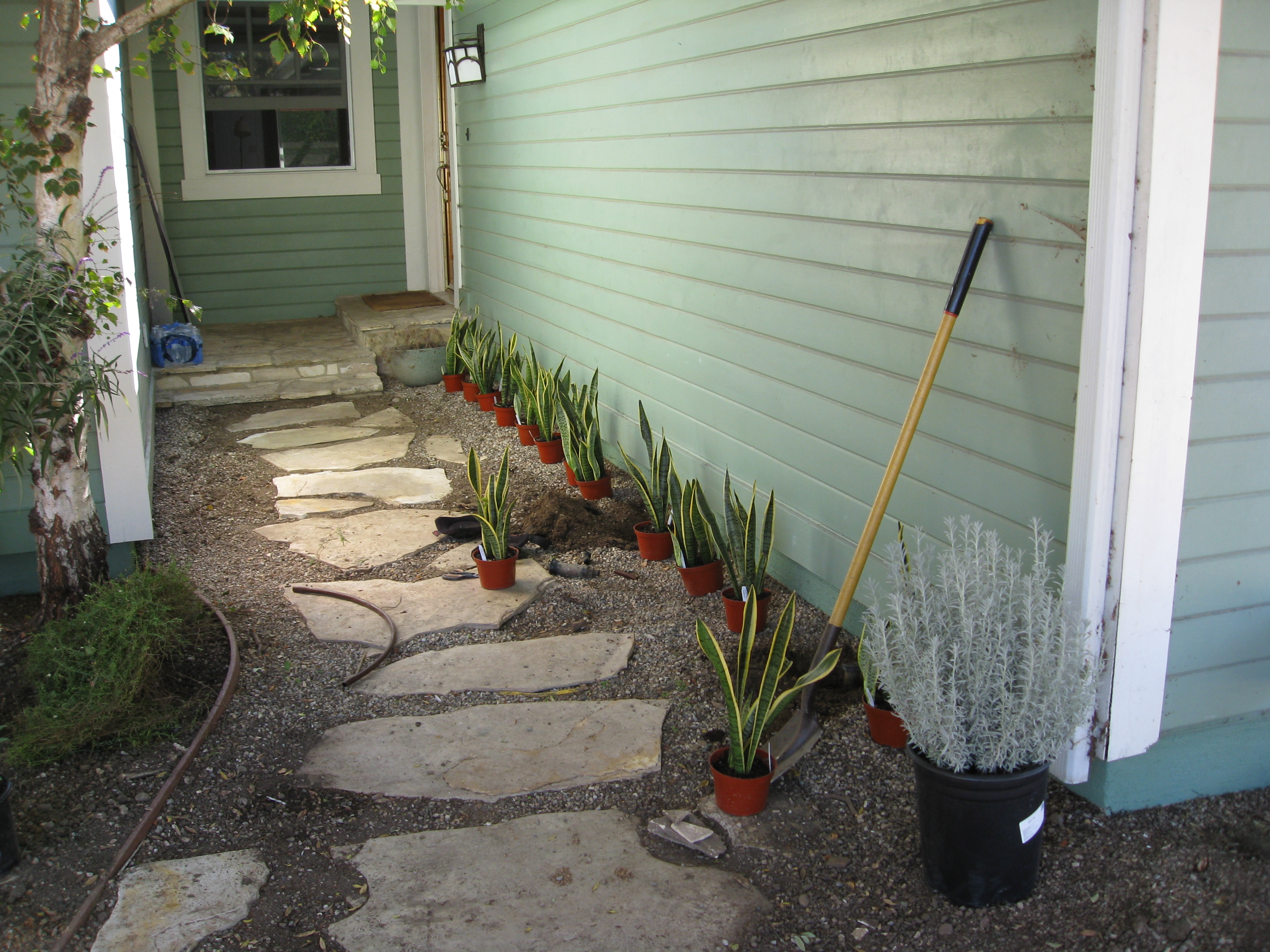 Shade plants line the pathway to the front door