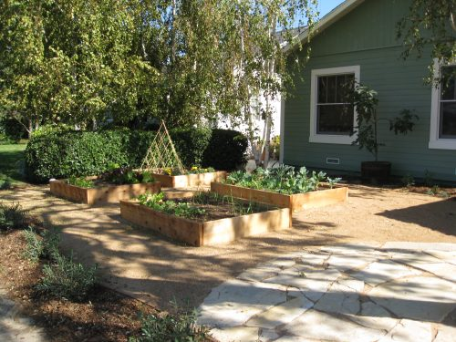 Read more about the article One More Turf Removal Rebate Garden