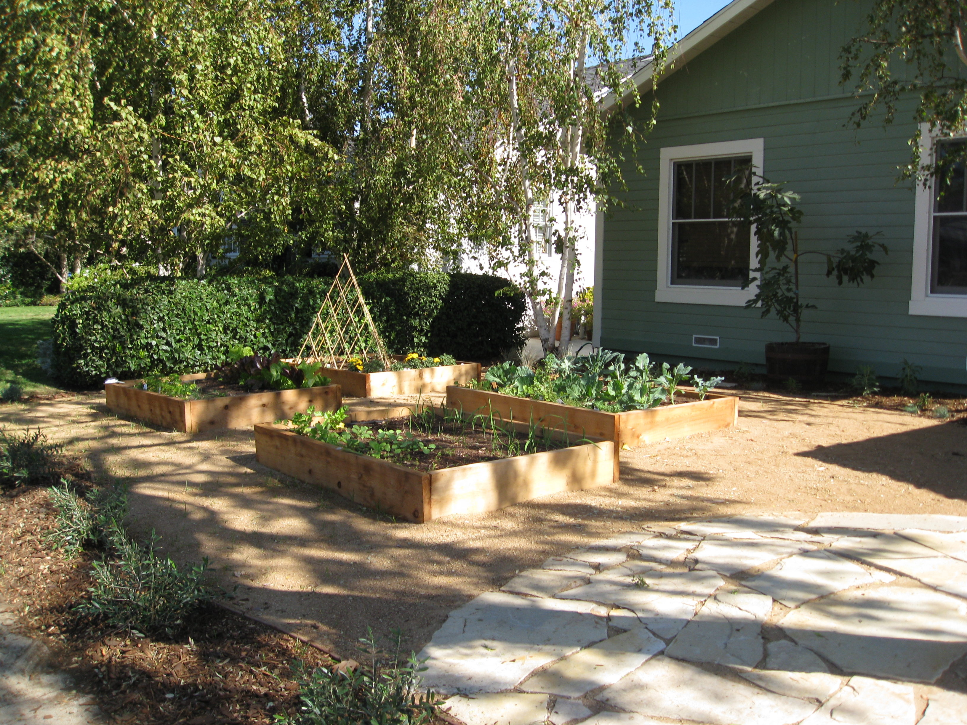 As plants grow in, the family can enjoy fresh lettuce, kale, and radishes from their new garden.