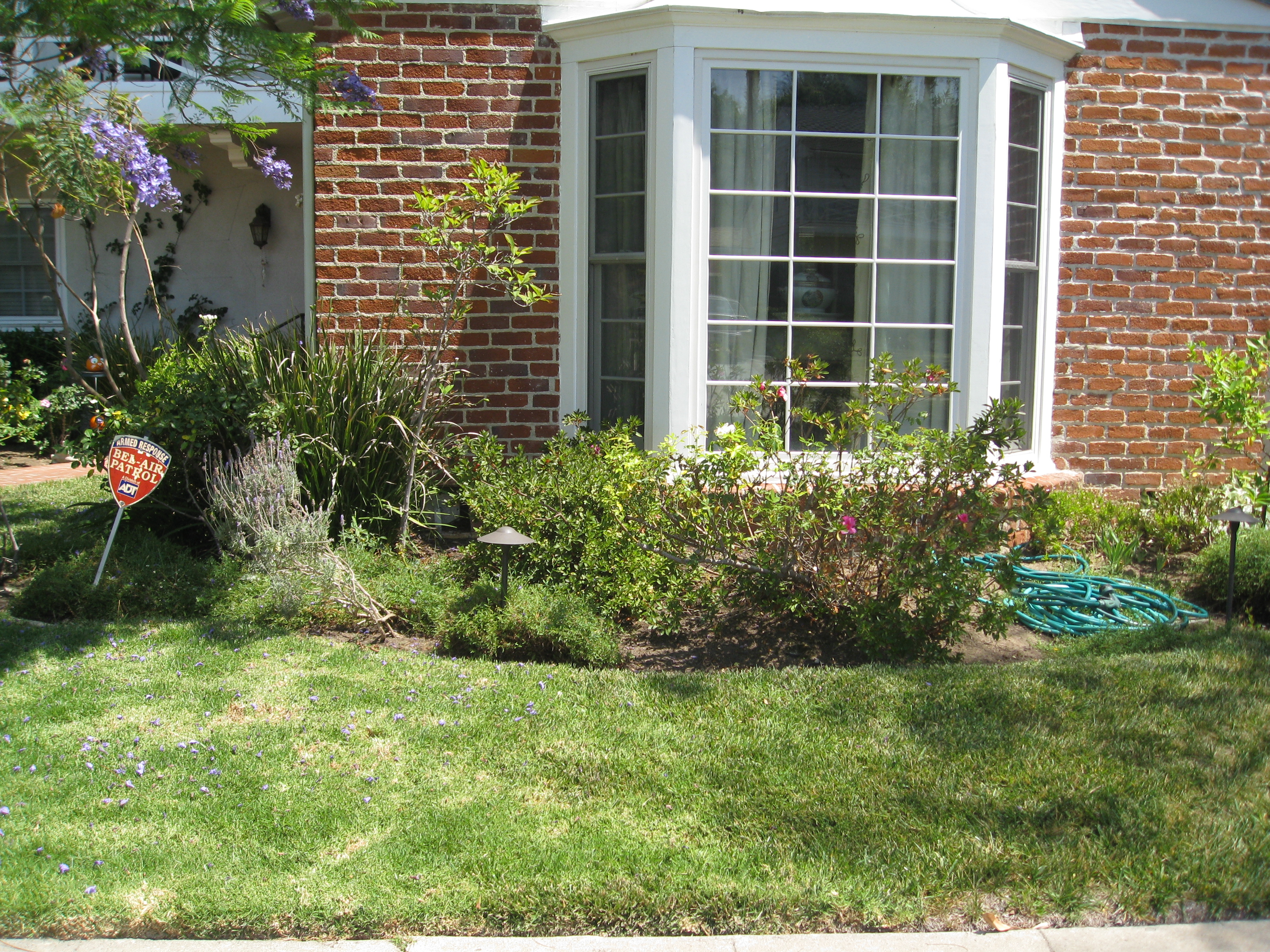 The new home of a mini-orchard and bioswale to capture and sink water from a nearby downspout.