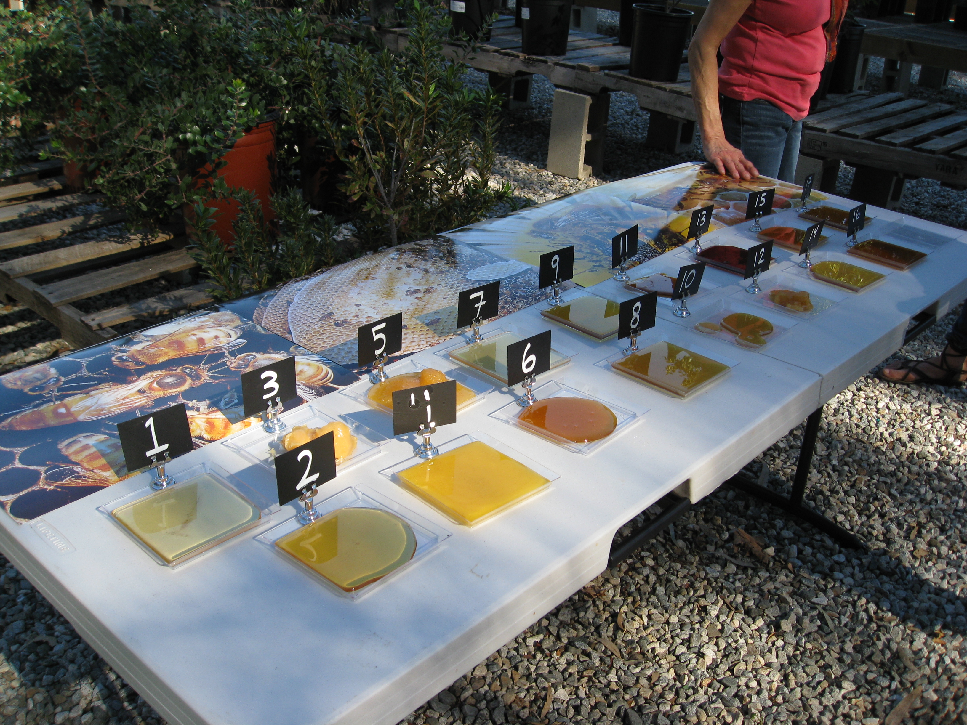 17 honey samples from around the world, ready for tasting.