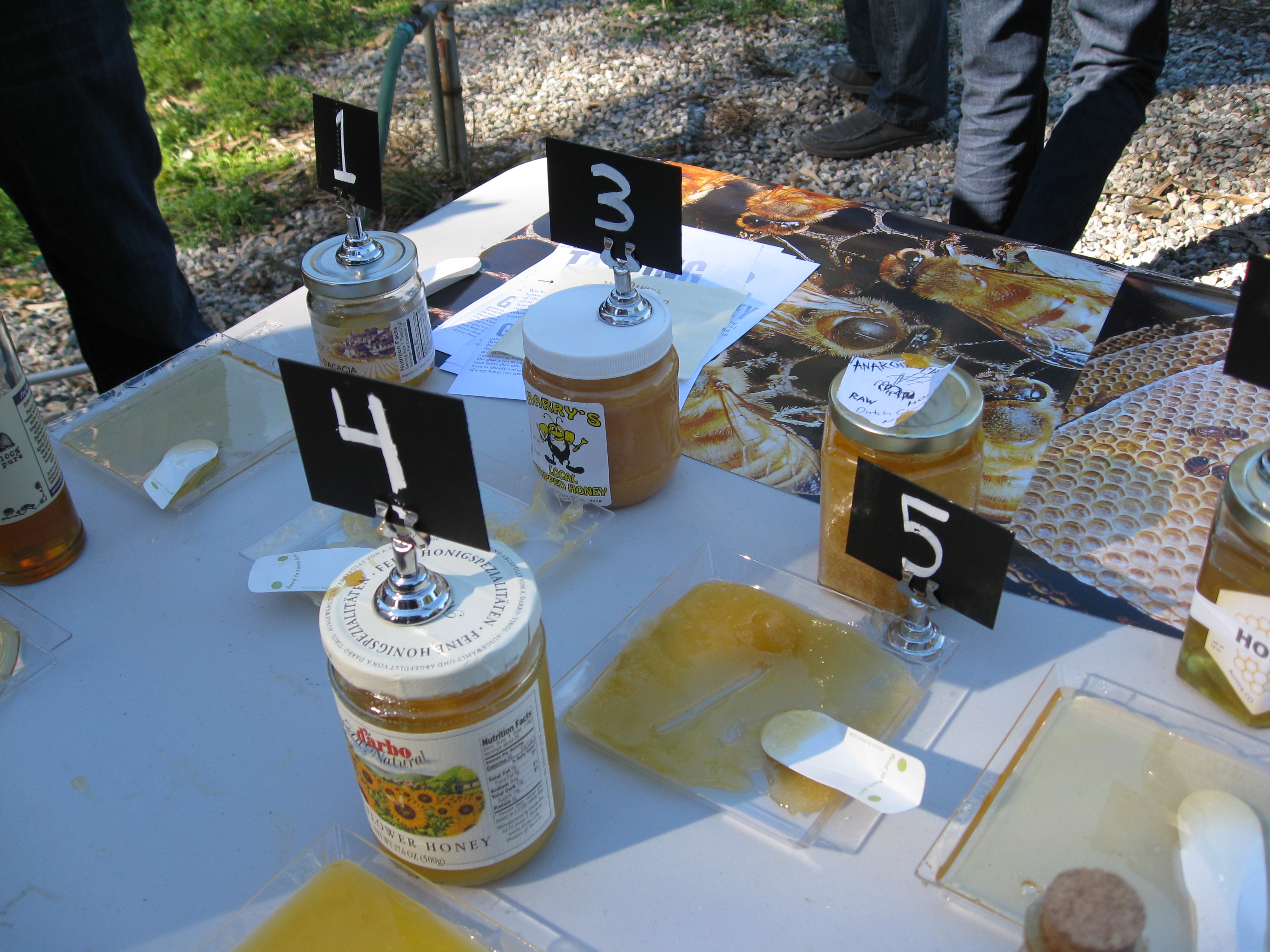Sam Comfort and Harry Stein are professional beekeepers on opposite coasts.