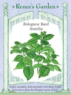 Renee's Seeds offers this new OP basil from Bologna, Italy.