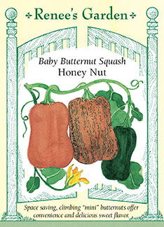 Honey Nut Butternut squash is beautiful to look at.
