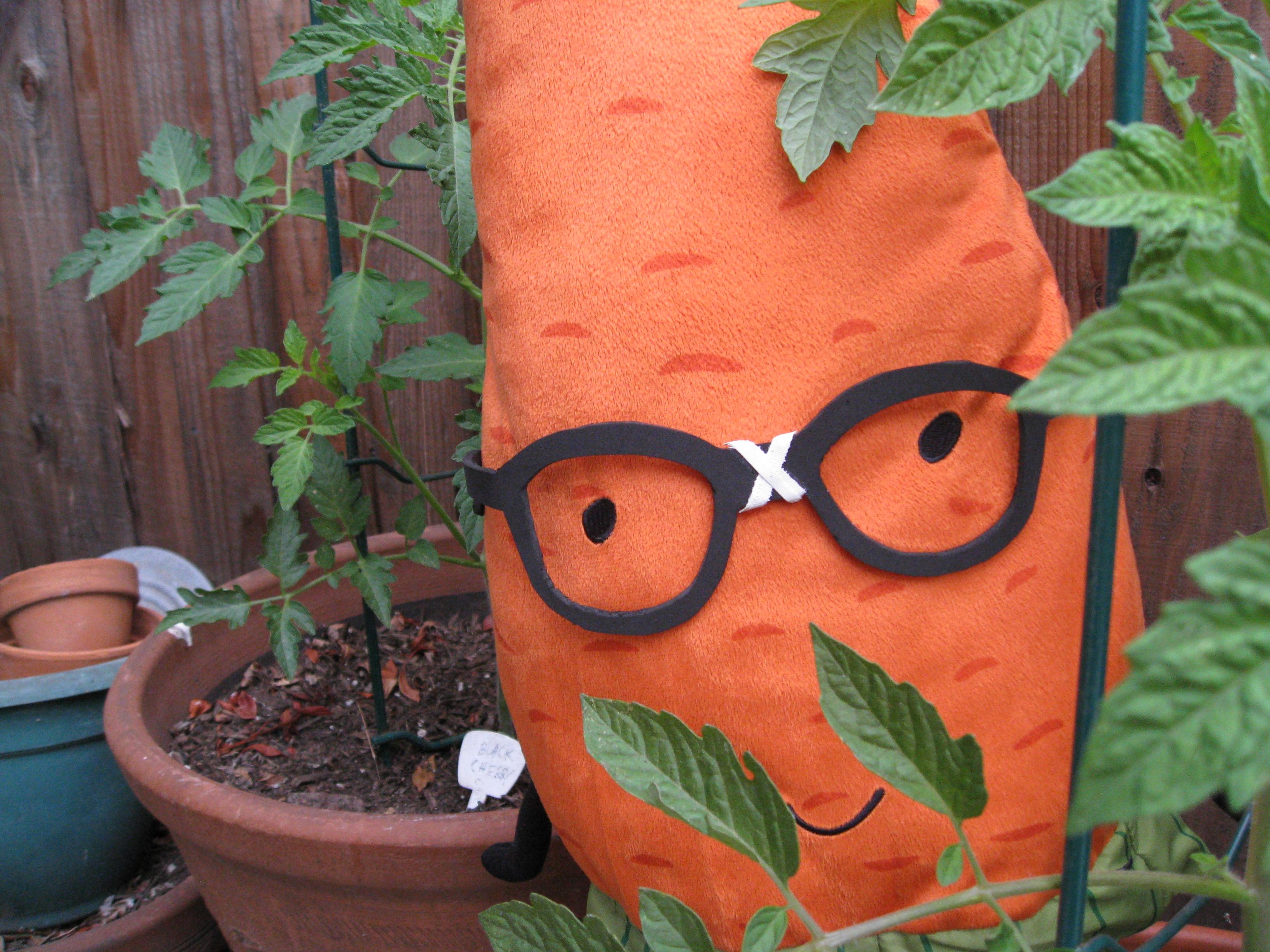 It's tomato season in Los Angeles!