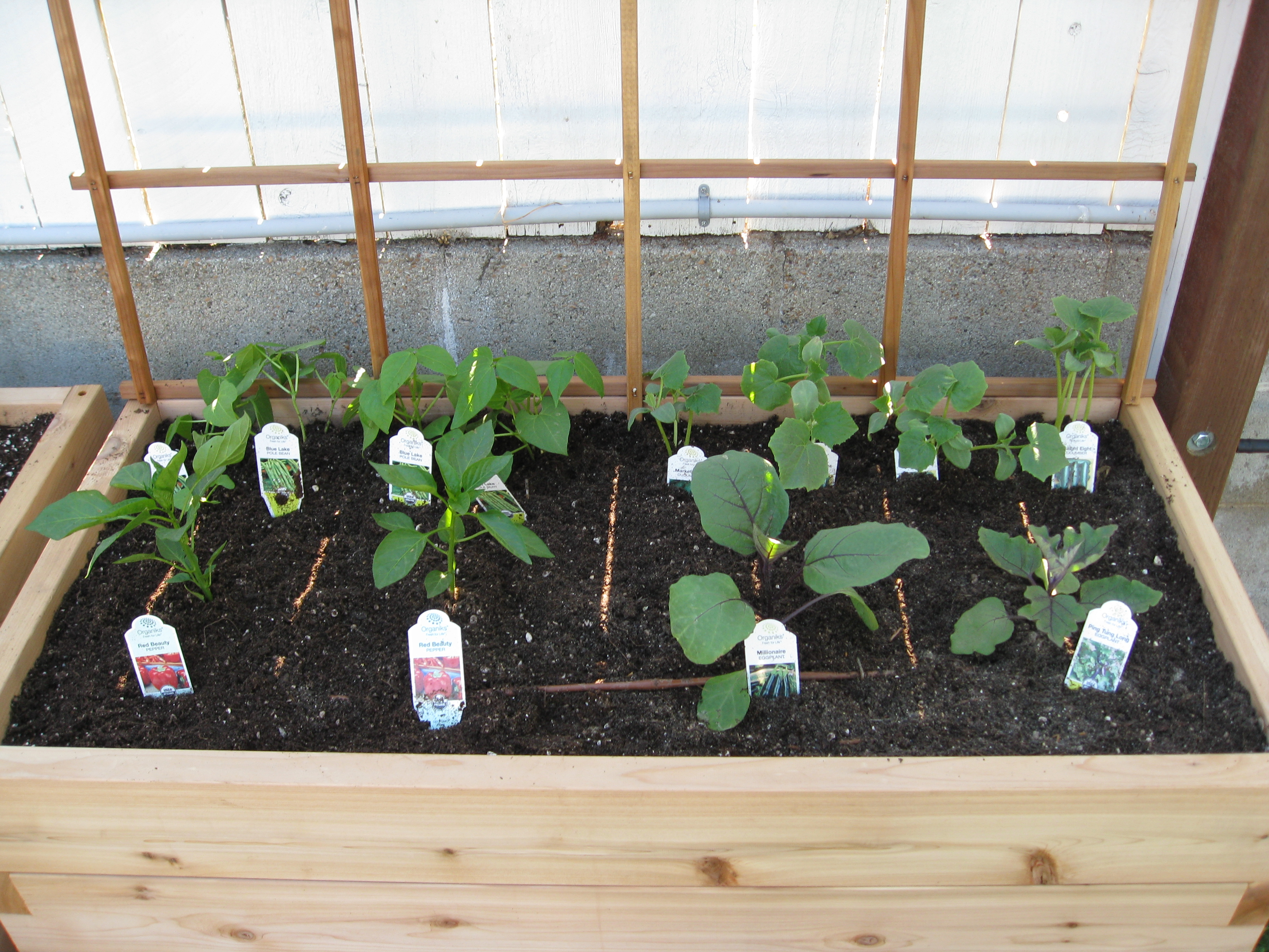 Peppers, cucumbers, pole beans and eggplants fill the last bed.