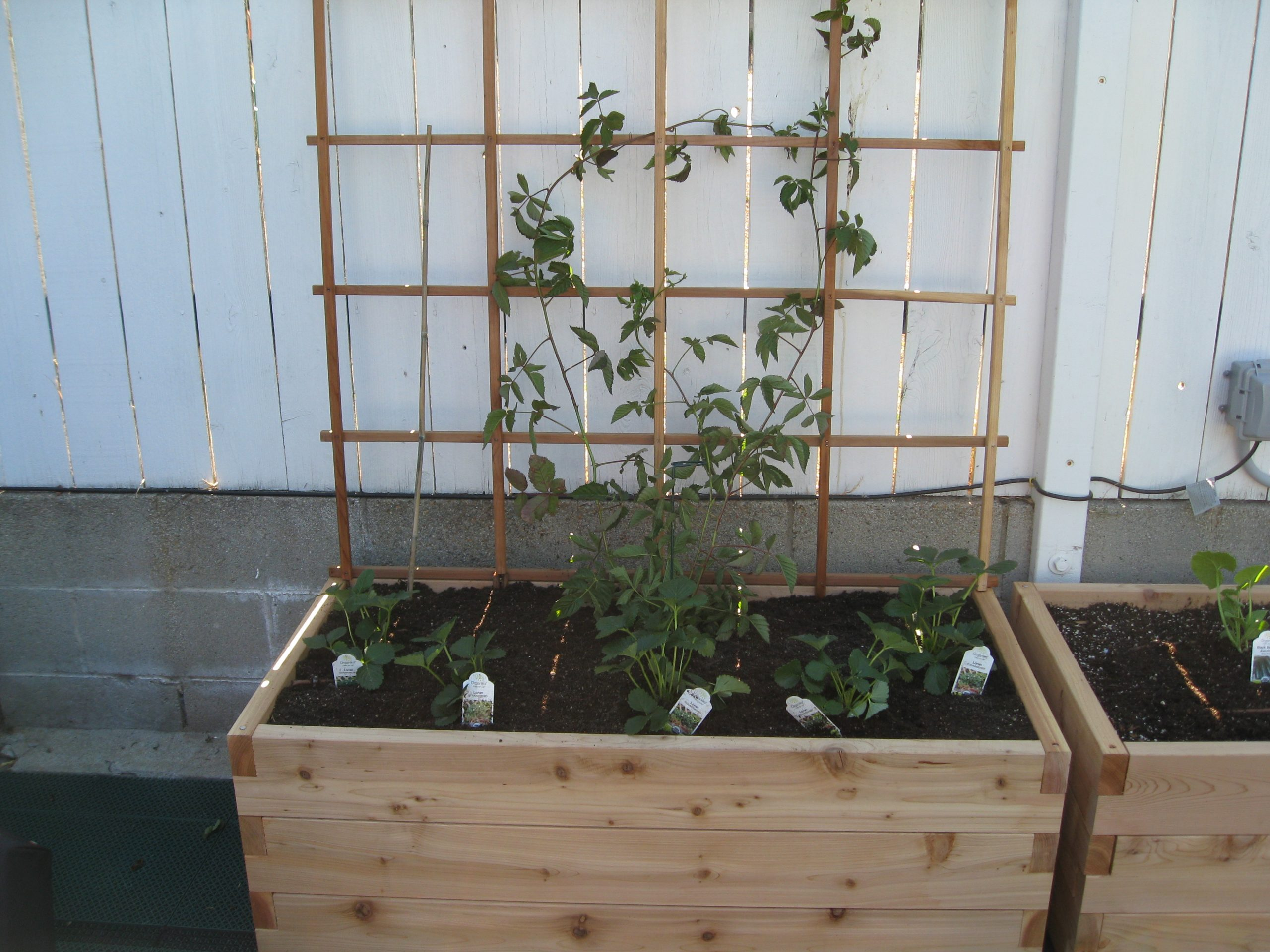 Read more about the article Starter Garden for Family