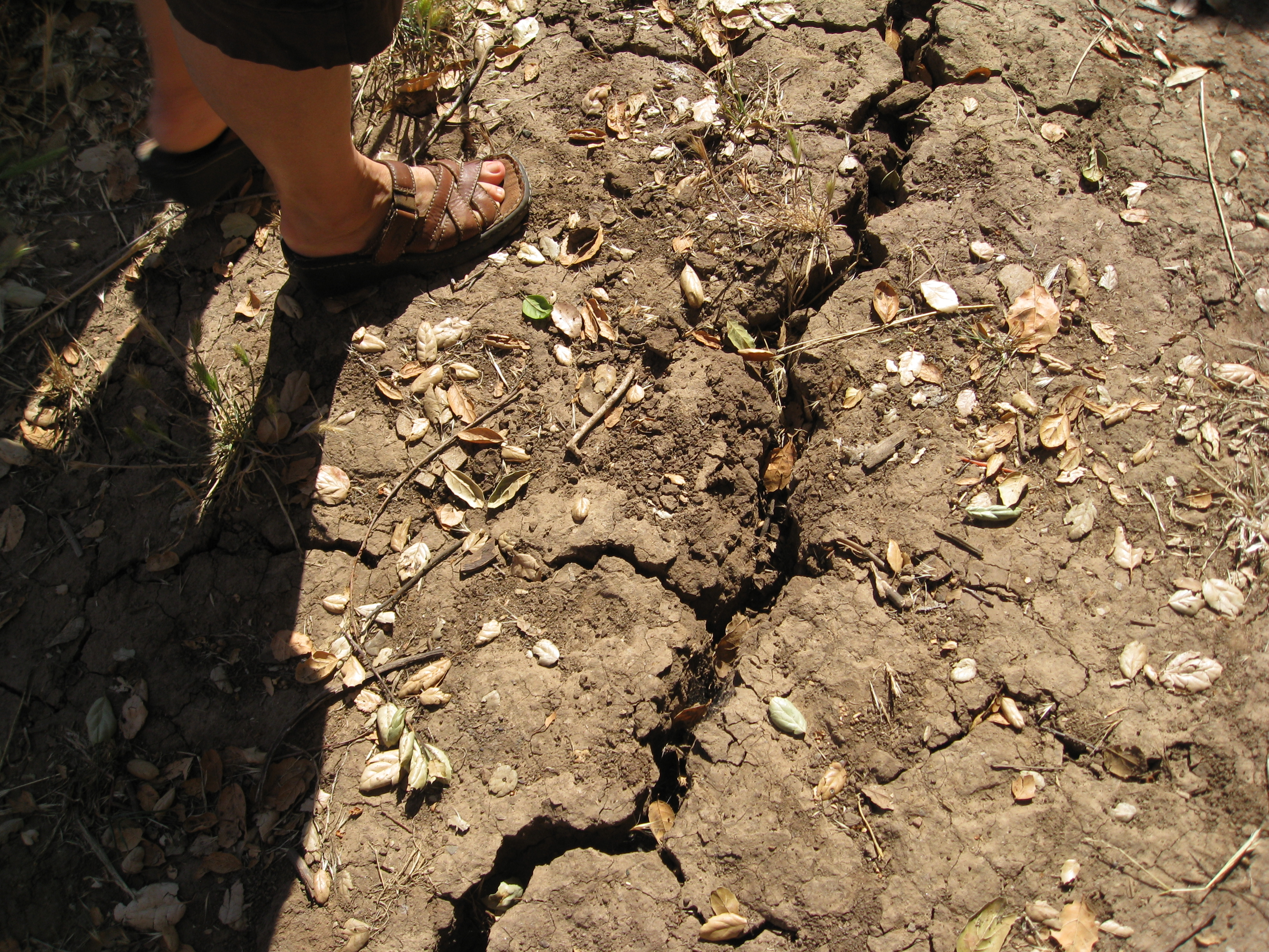 Dry, compacted soil in dire need of cover.