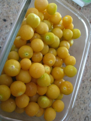 Read more about the article Growing and Harvesting Ground Cherries