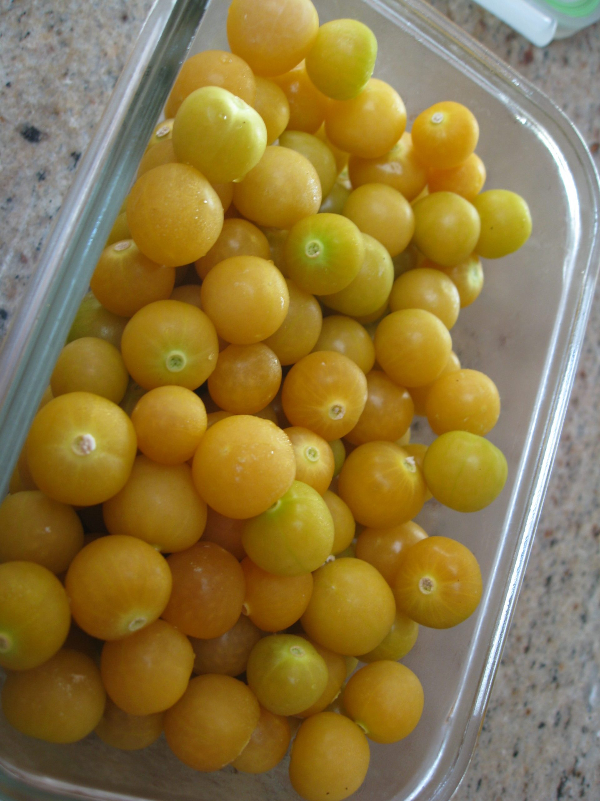 You are currently viewing Growing and Harvesting Ground Cherries