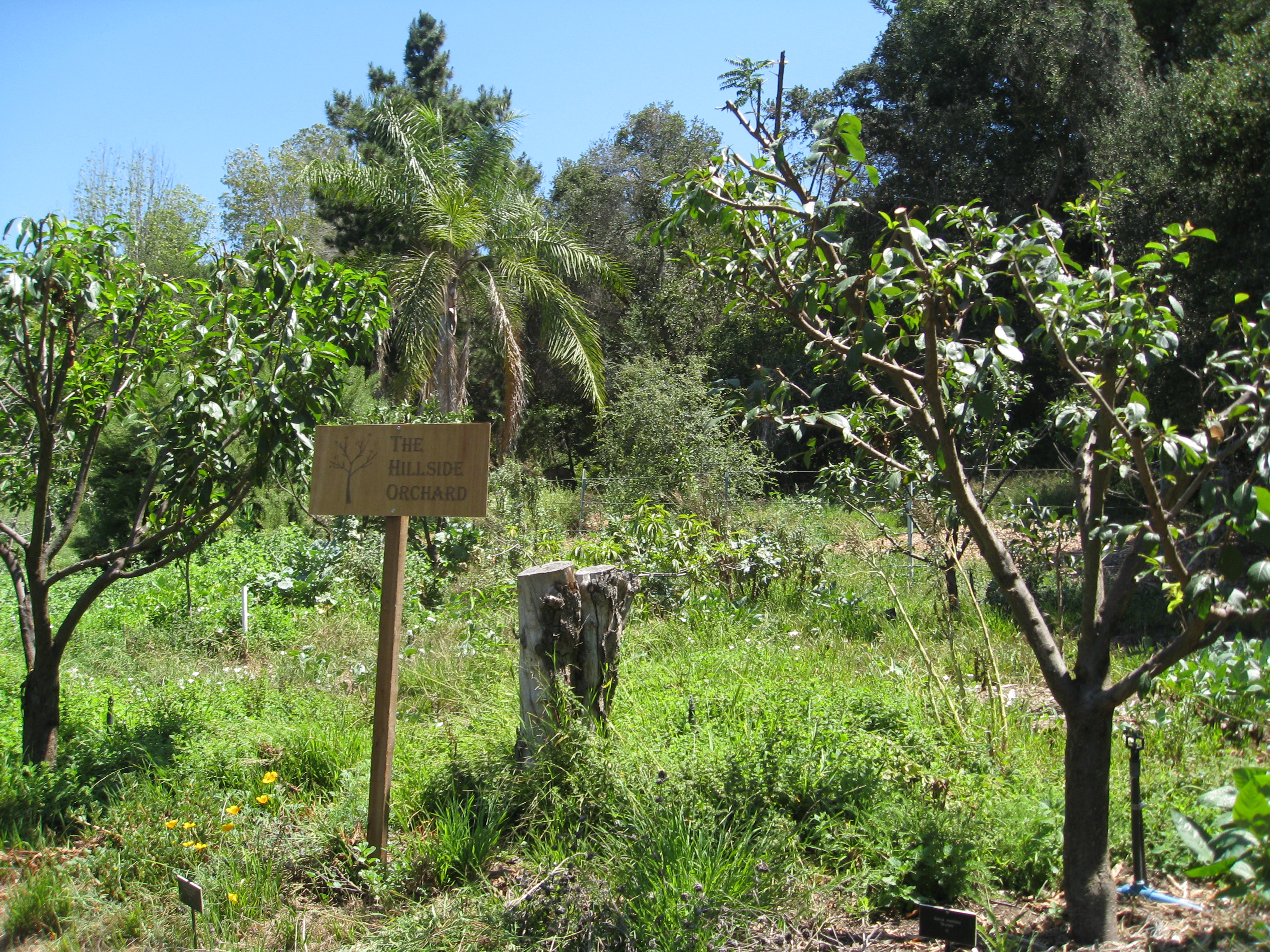 The Food Forest is stocked with fruit trees and understory plants. Still getting established, but much further along than the sticks we saw in 2009.