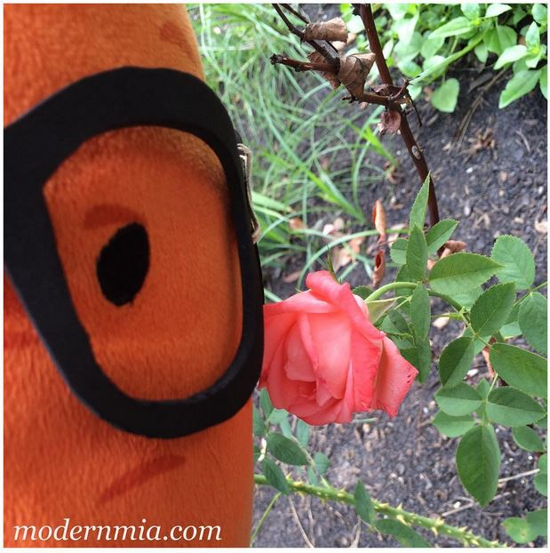 Taking time to smell the roses in Modern Mia's Garden