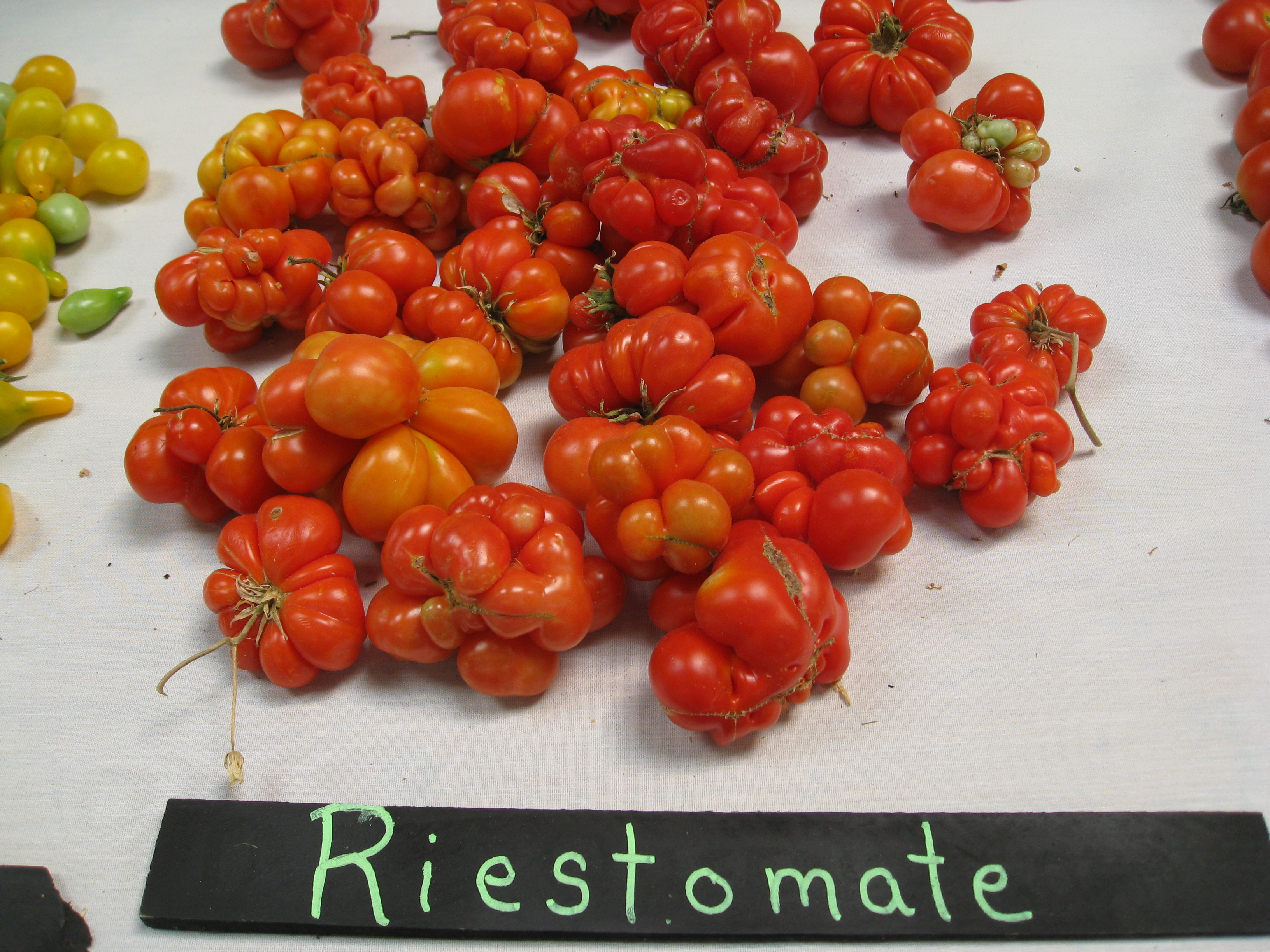The travelers tomato, live and in person!