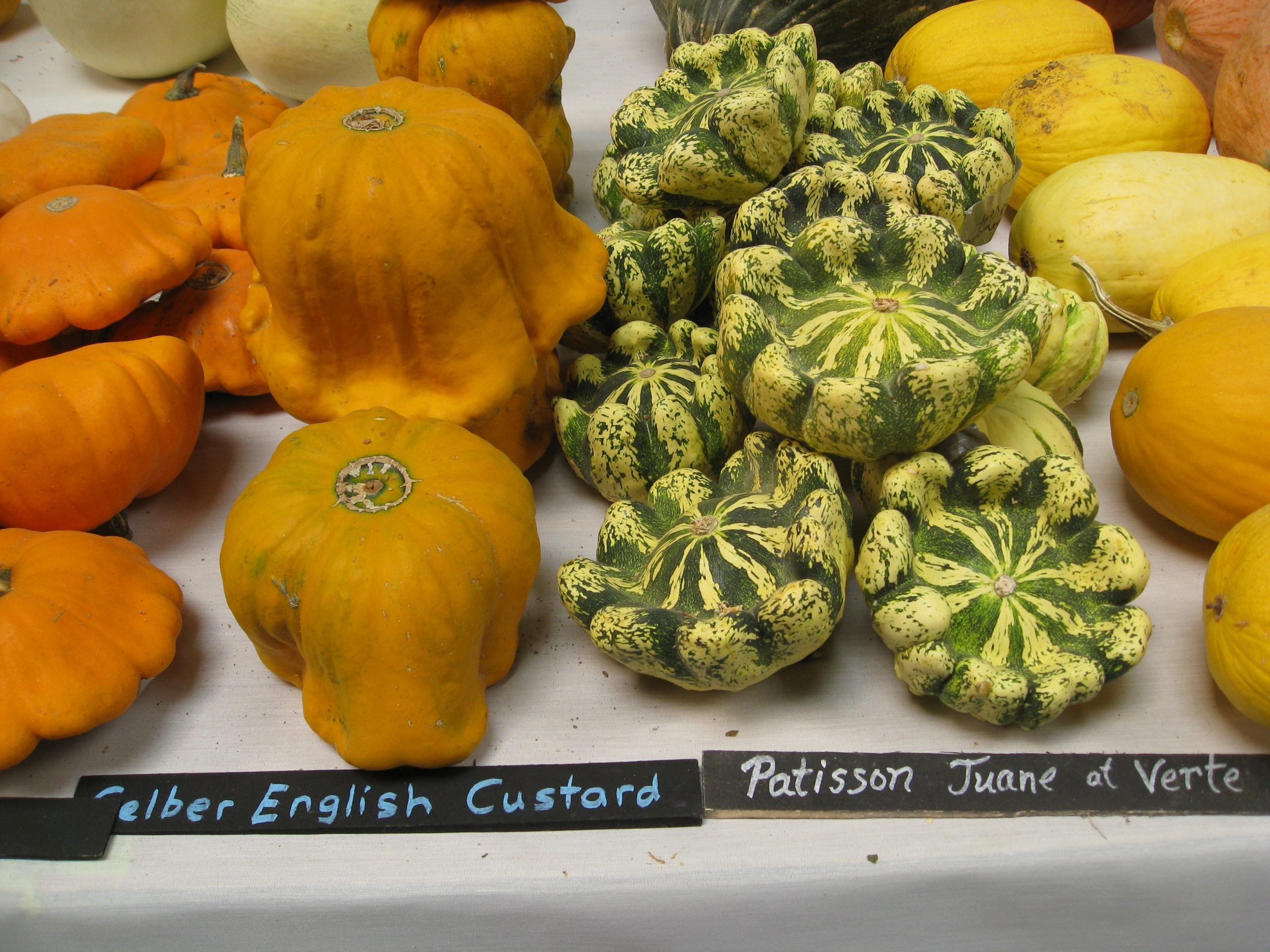 Read more about the article Wordless Wednesday: Heirloom Expo 2015
