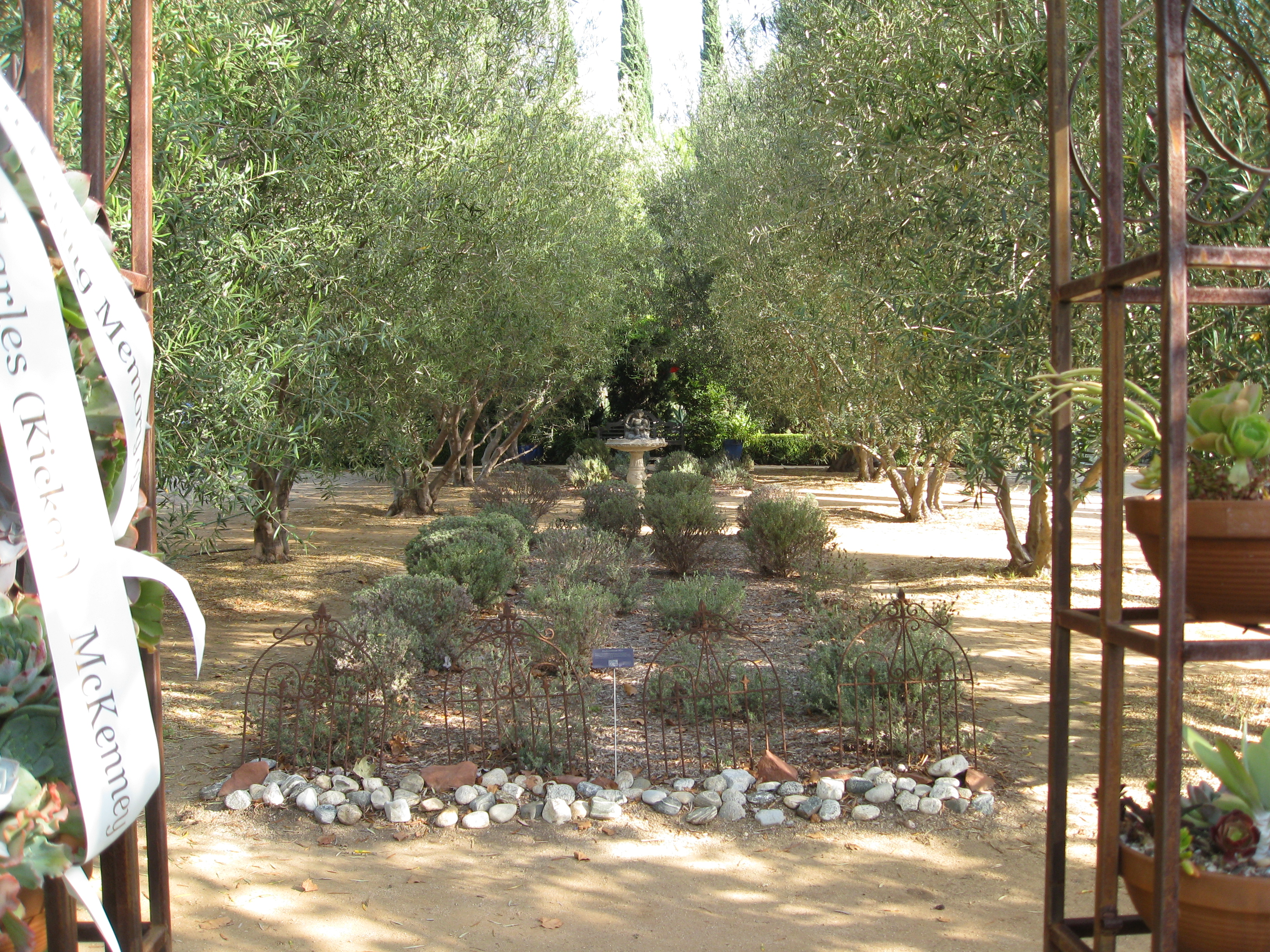 Coming through the gates of the garden, you're greeted by lavender and olive trees.