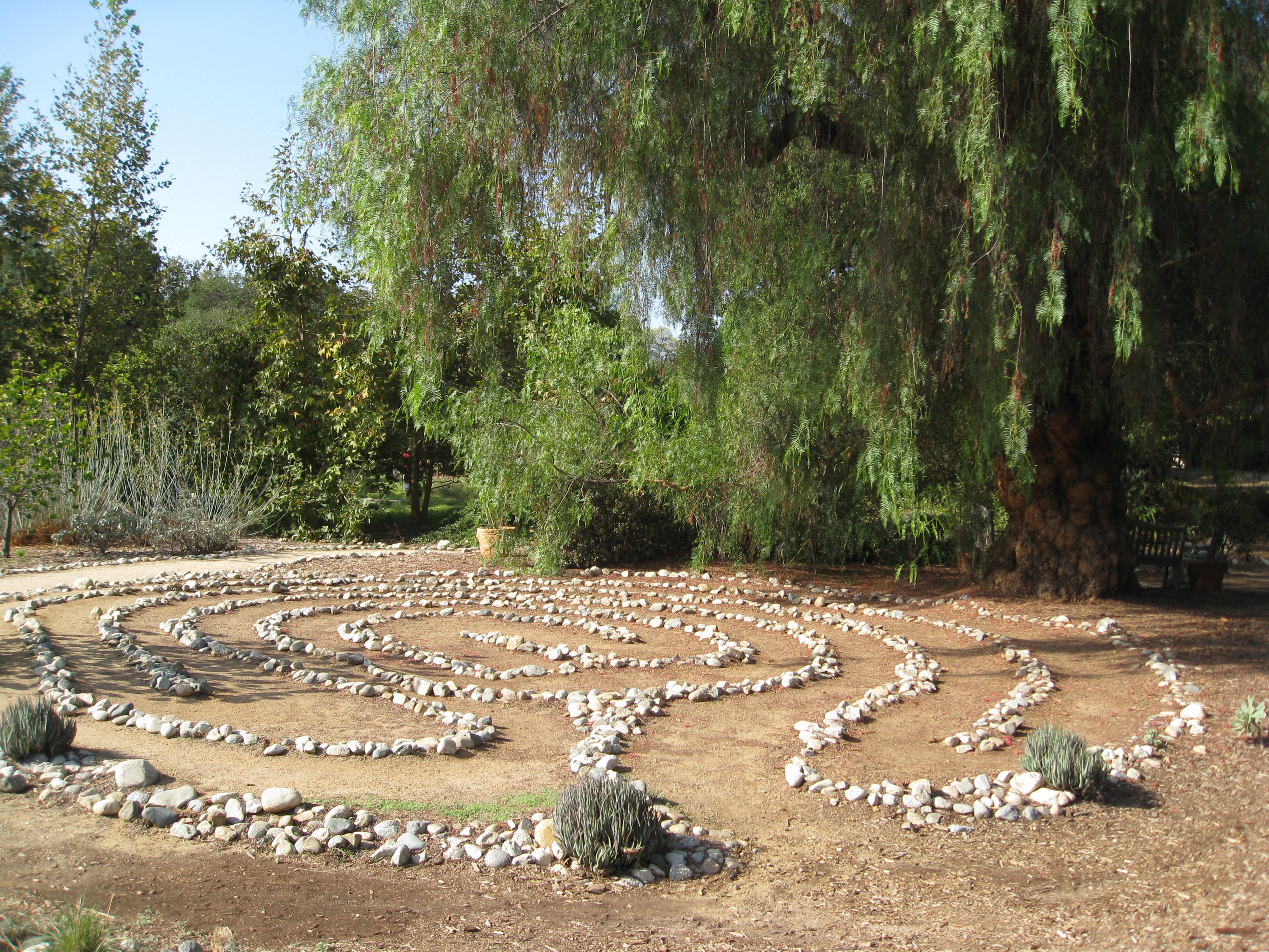 The labyrinth is watched over by an ancient California pepper tree.