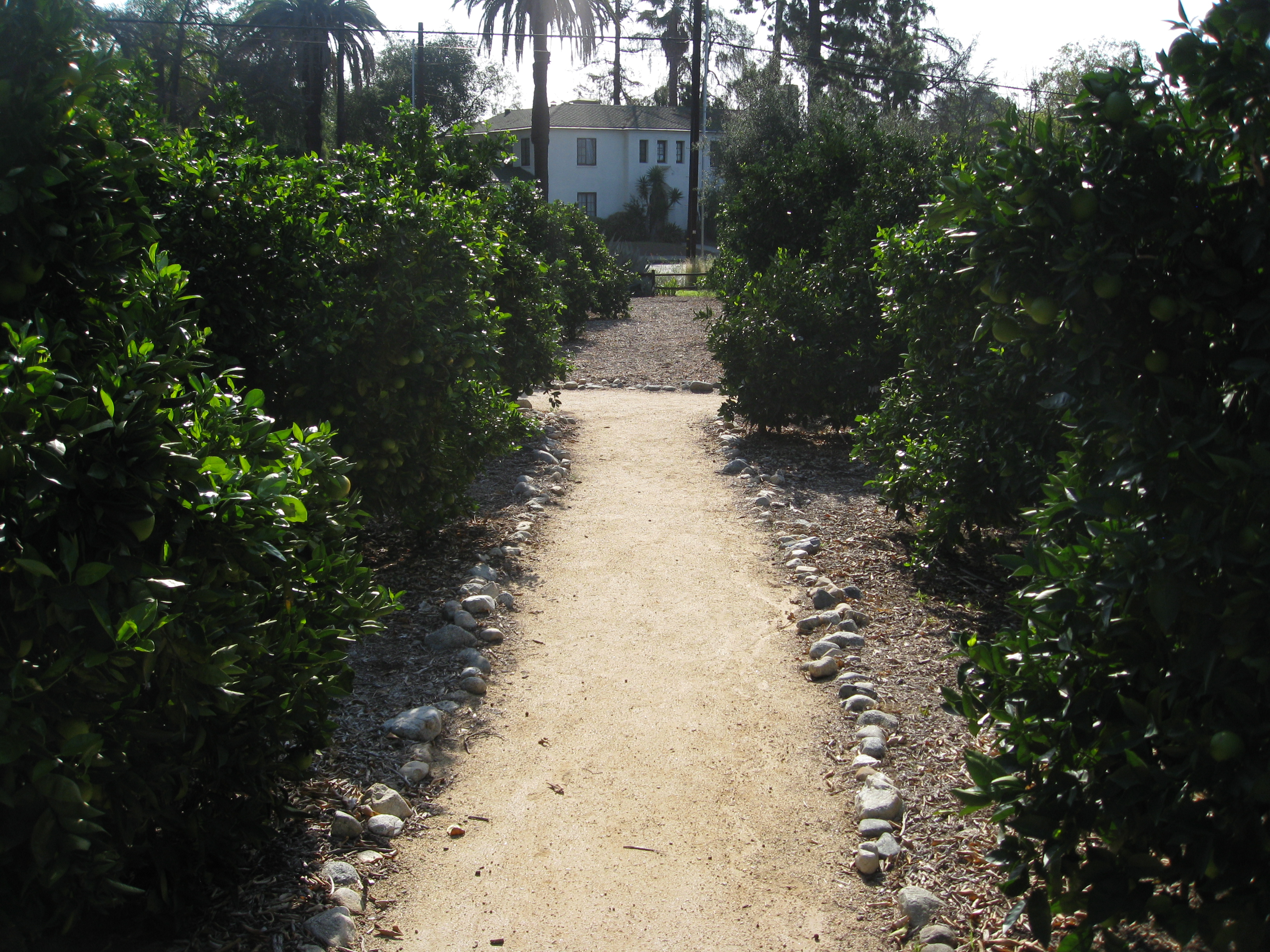 In memory of orchards that once occupied acres of land, the designers created a small citrus orchard, from which comes their famous marmalade.