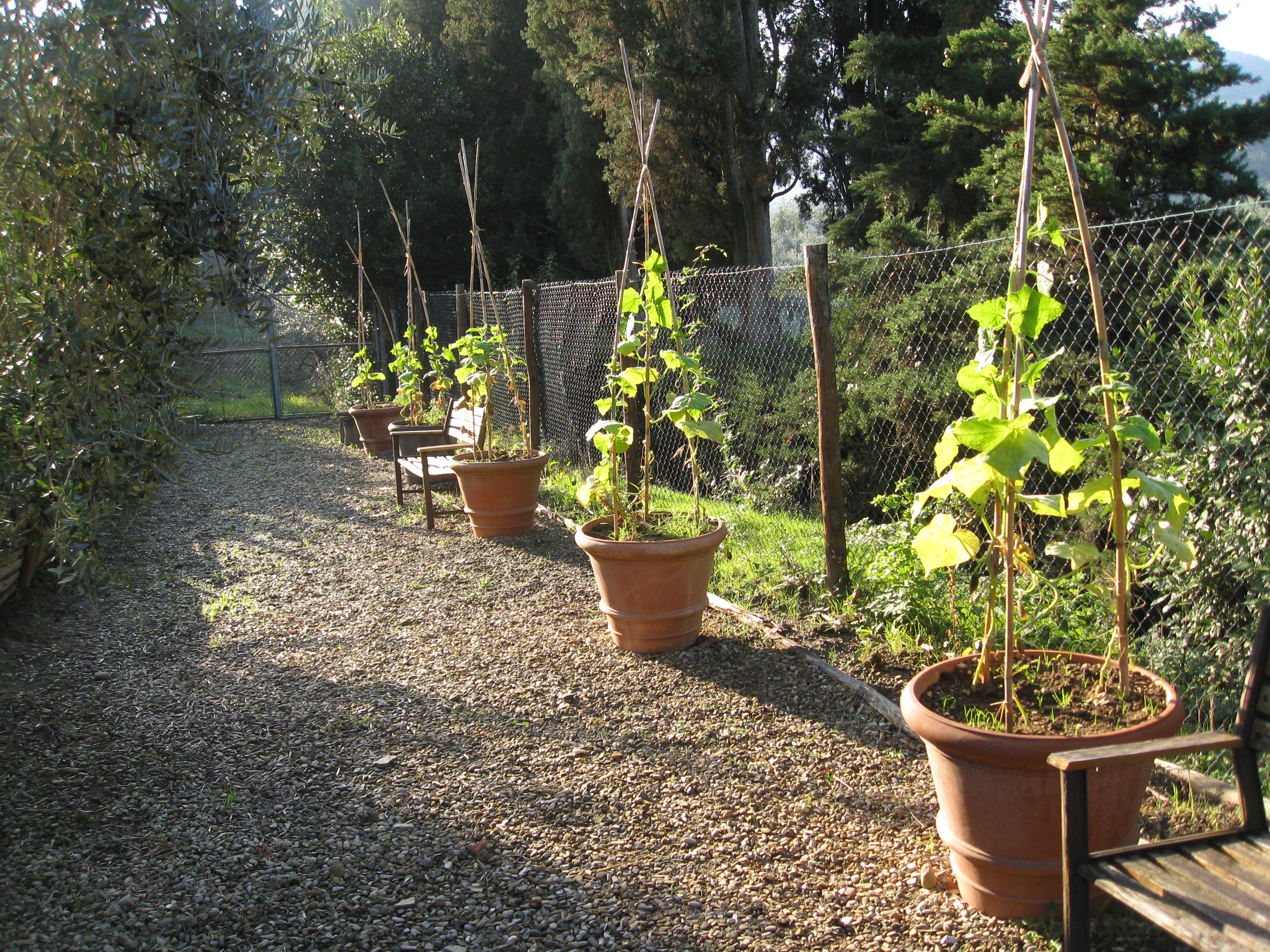 Strawberries and cucumbers left from summer fill terra cotta pots to the north.