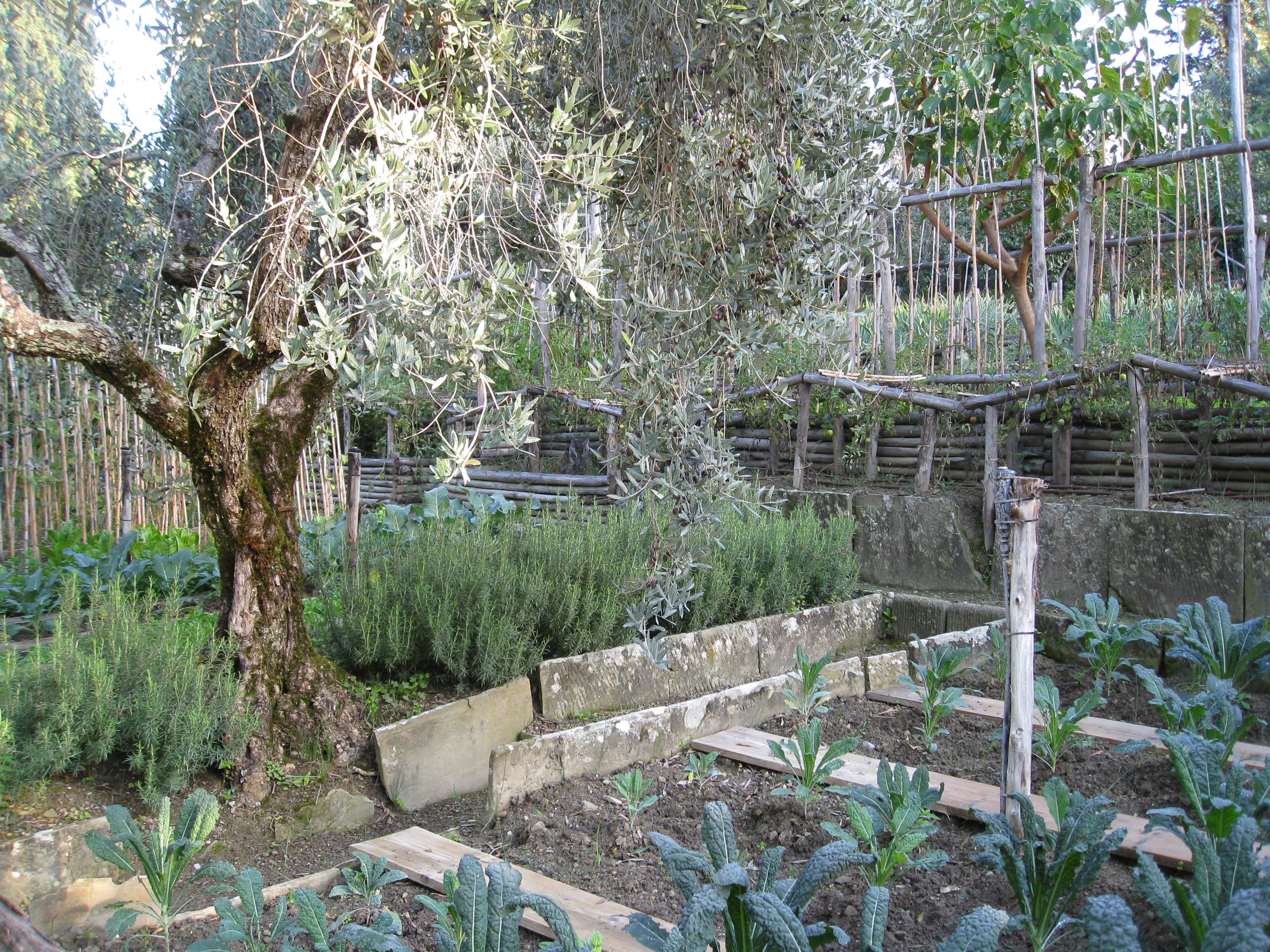 Olive trees ladened with fruit anchor the garden.