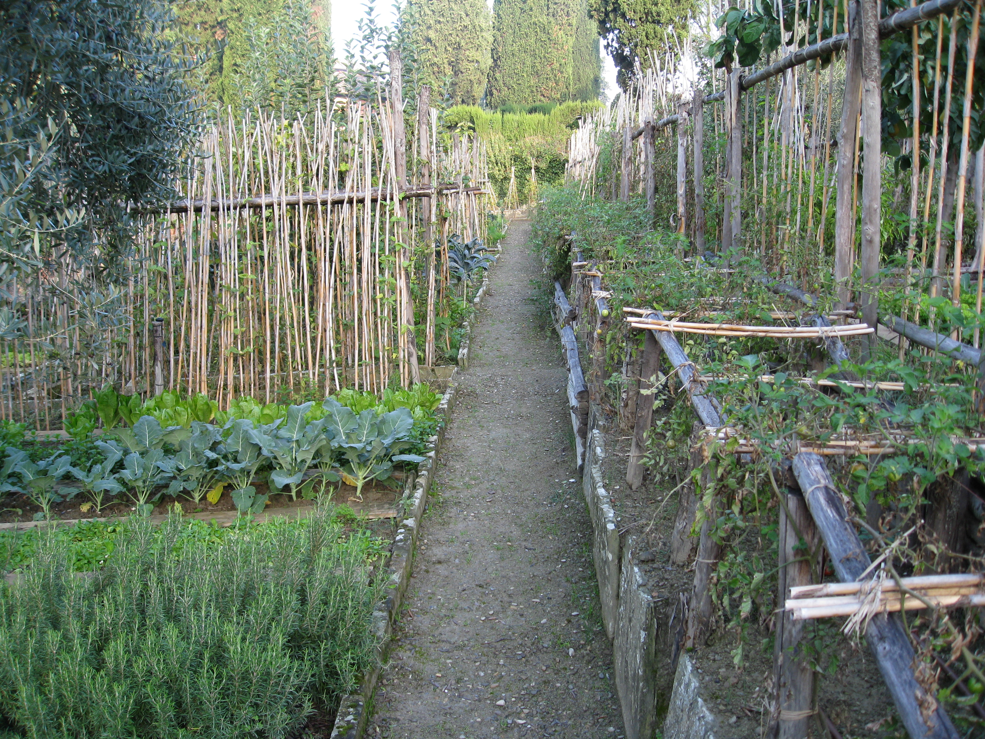 Pathways between crops of tomatoes, kale and rosemary run east/west.