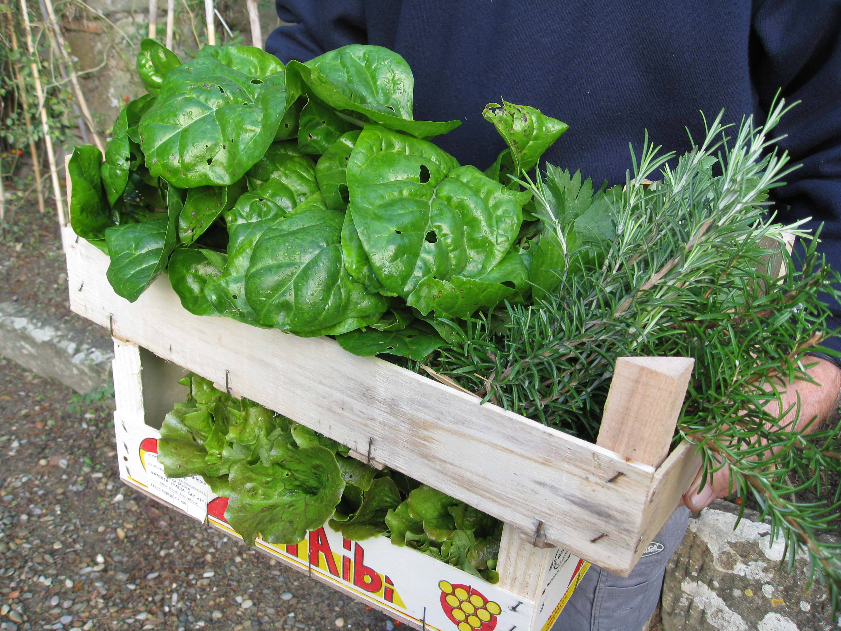 Fresh greens and herbs for the kitchen.
