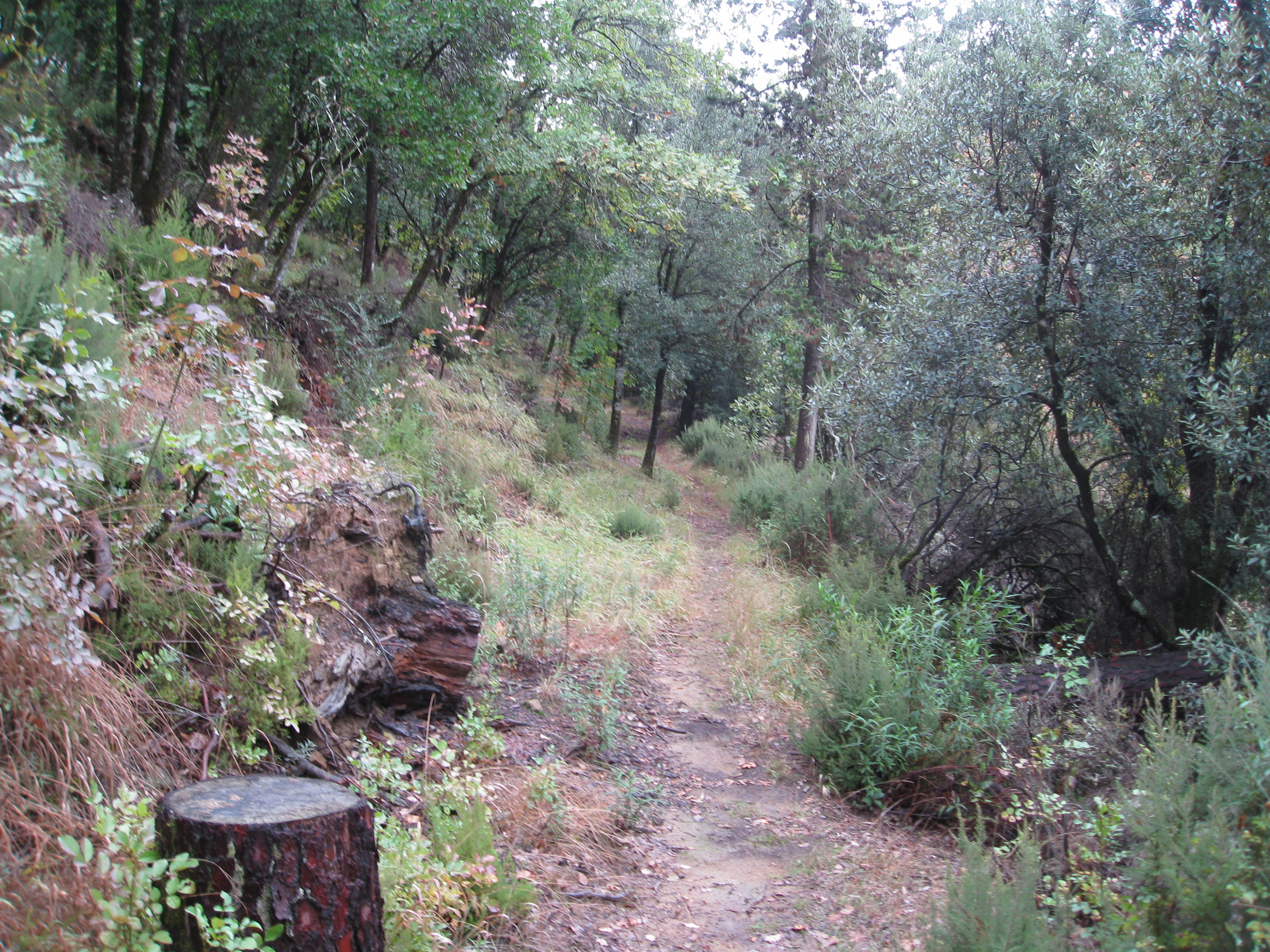 Hiking in Italy is surprisingly similar to Southern California trails. We have the same weeds.