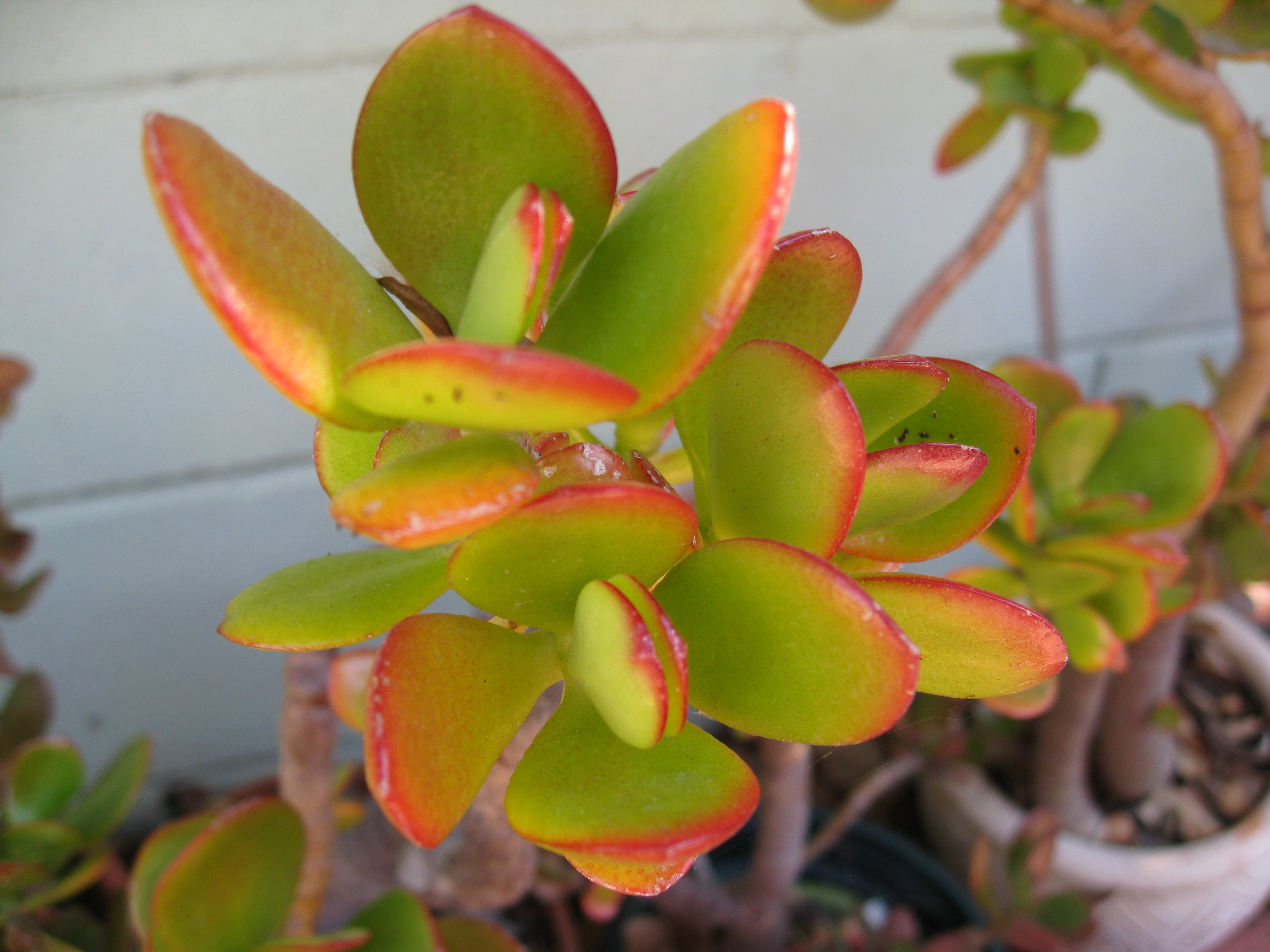 Ask Gardenerd Winter Care For Succulents Gardenerd