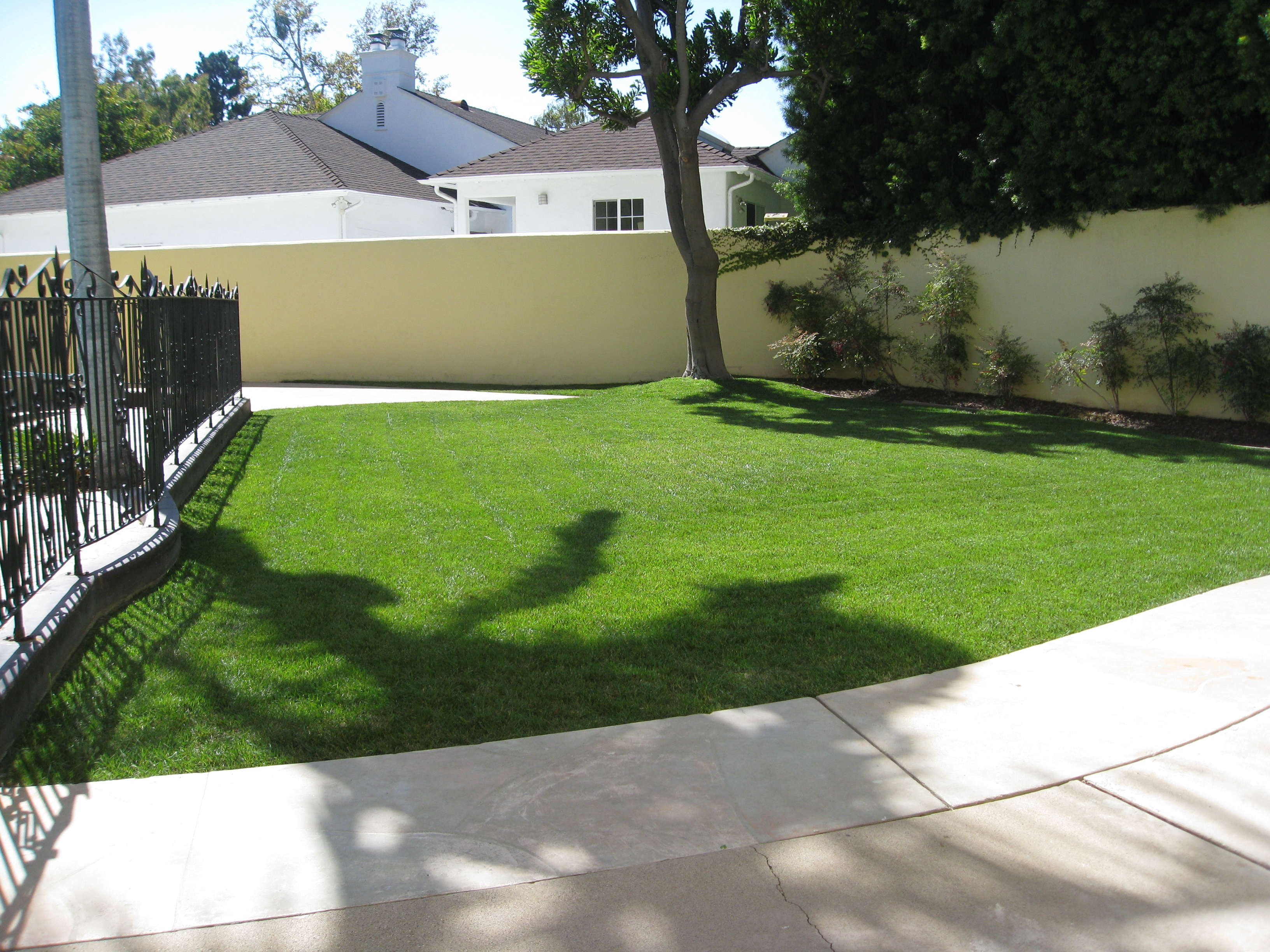Another lawn bites the dust to make way for a vibrant vegetable garden.