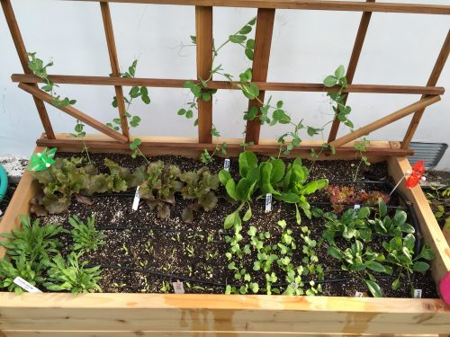 Read more about the article Toddler Garden