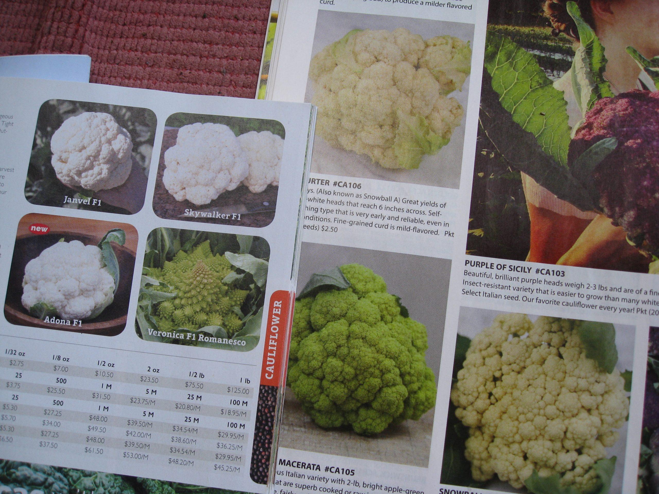 You are currently viewing Ask Gardenerd: Big Cauliflower – No Head