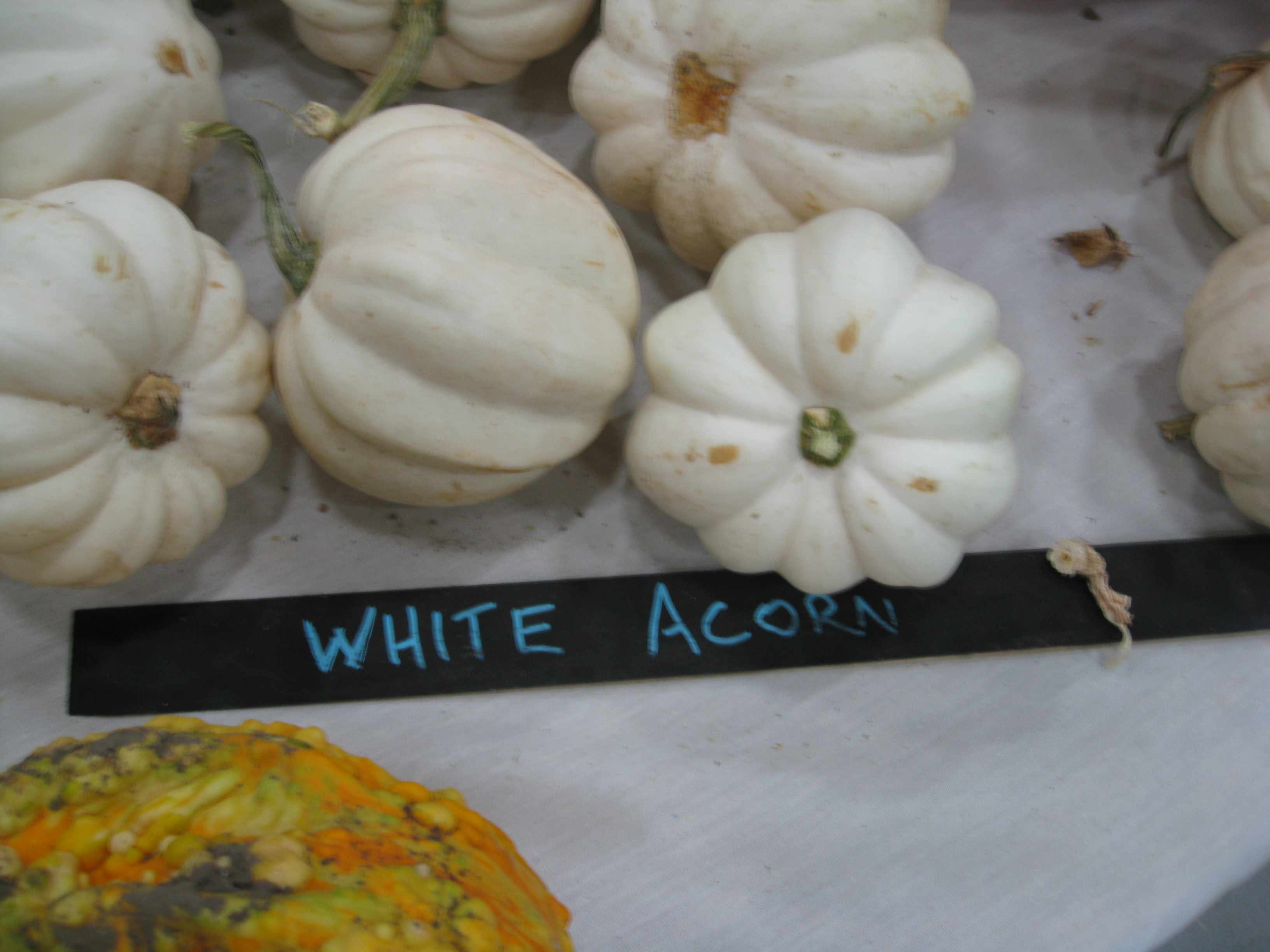 Our blurry photo of White Acorn Squash was taken in haste.
