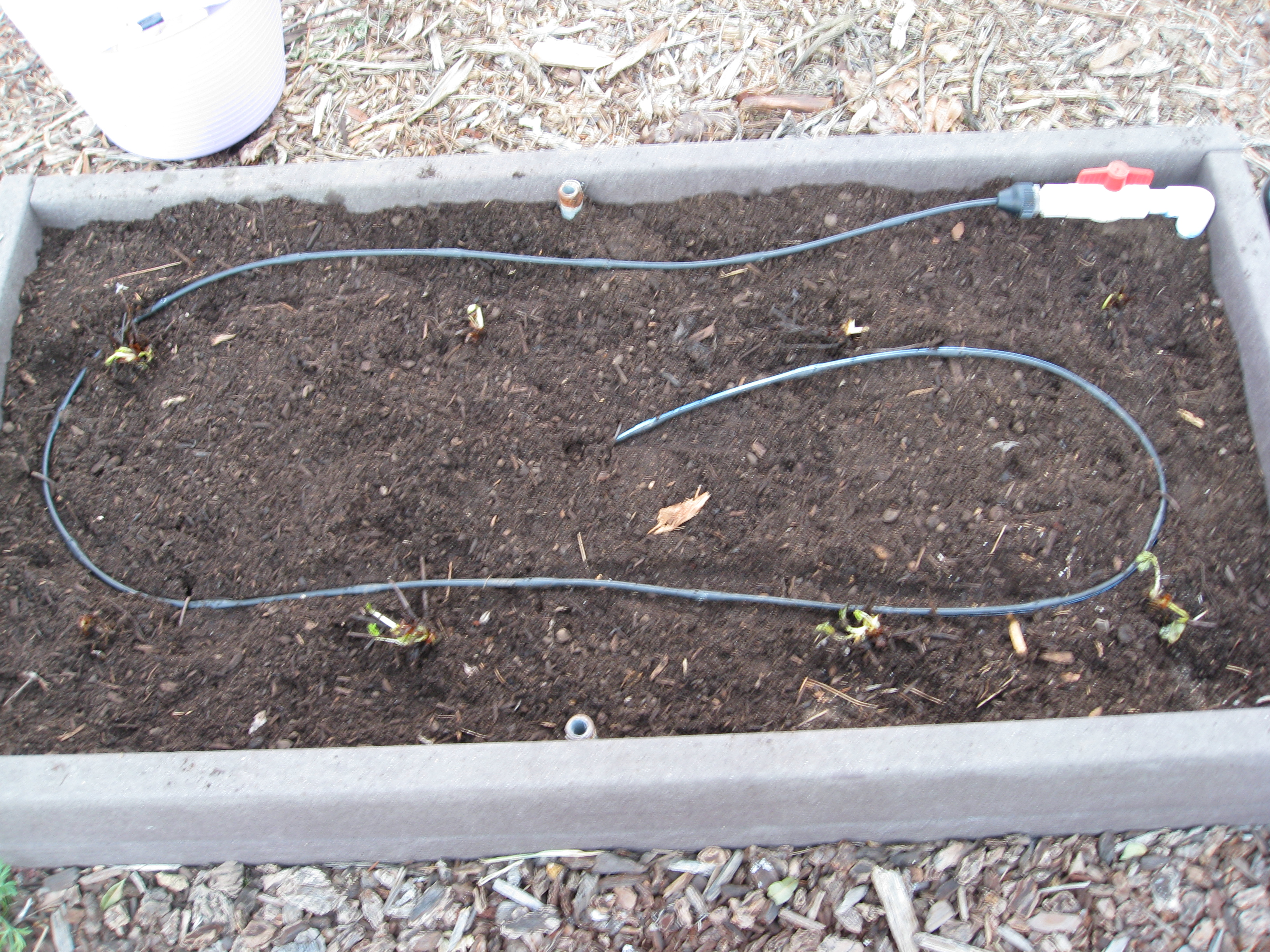 """Drip irrigation with 6"""" emitters are perfect for watering strawberries."""