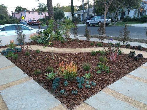 Read more about the article Design: Southern Hemisphere Garden