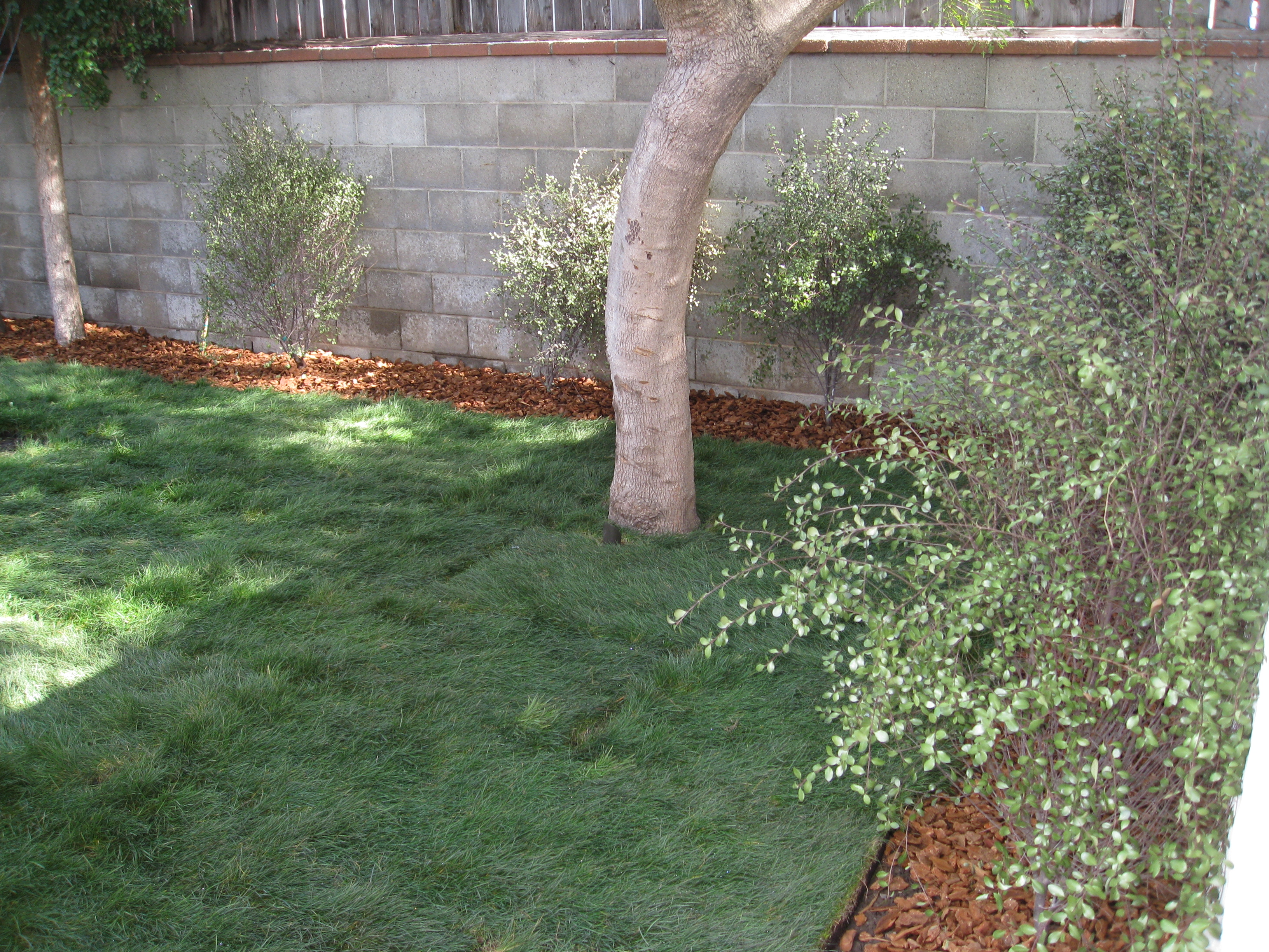 When California native grass sod was just installed.