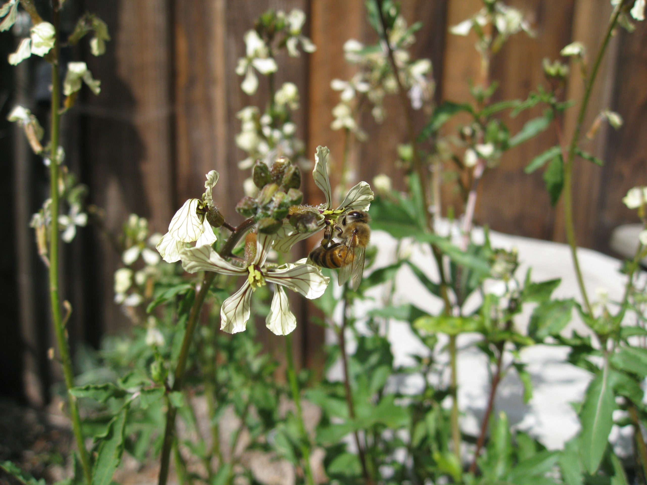 Read more about the article YouTube: Honey Harvesting Tricks for Home Gardeners