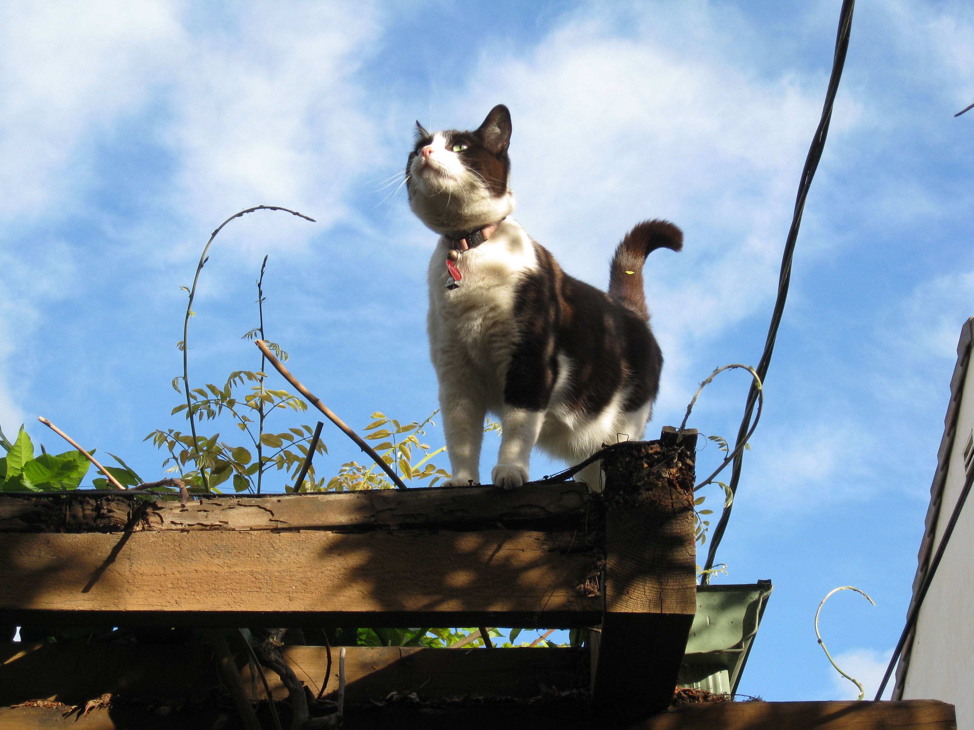 Mittens the supercat protects the garden from vermin.