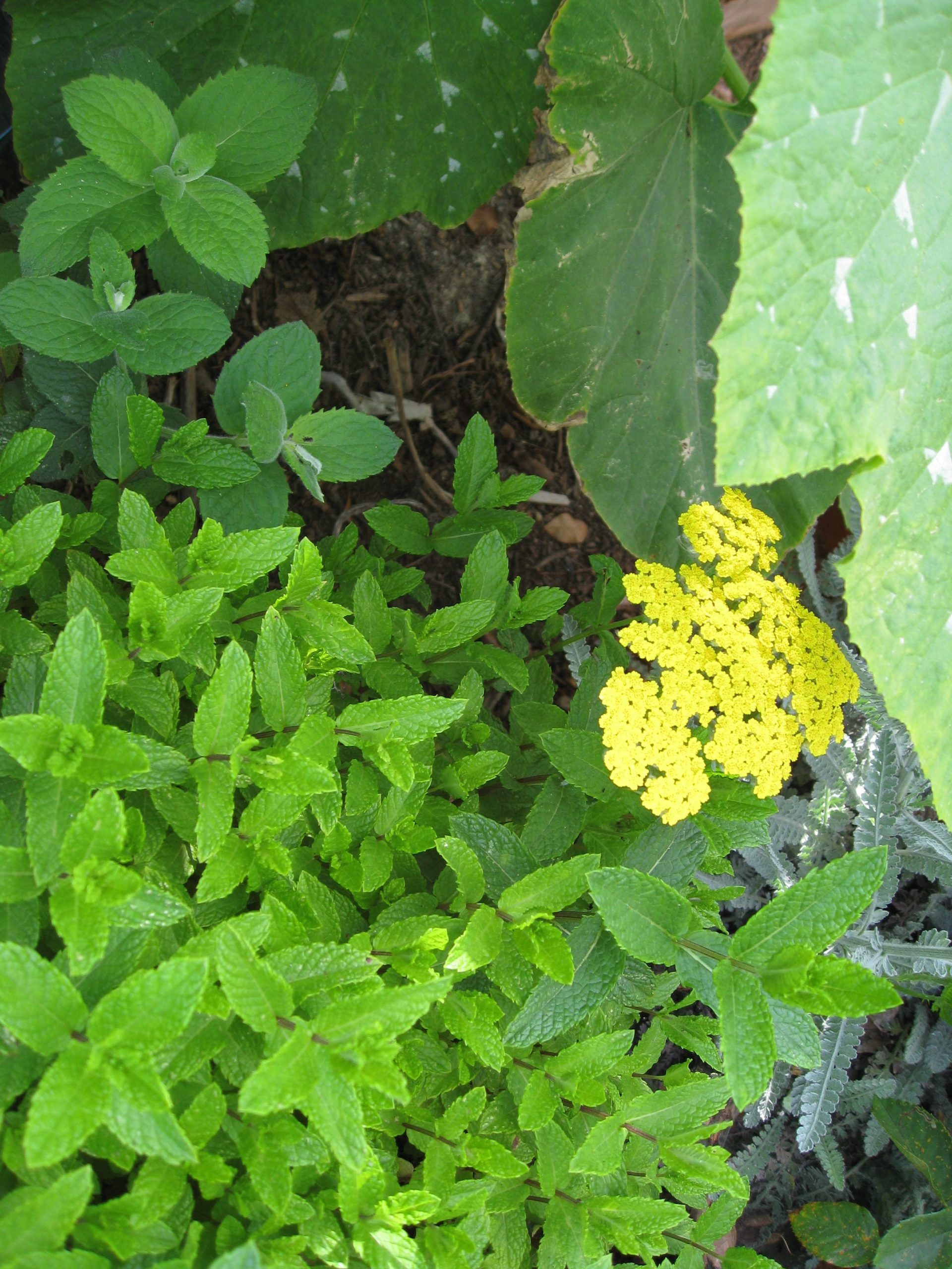 Read more about the article YouTube: Herbs for Bees